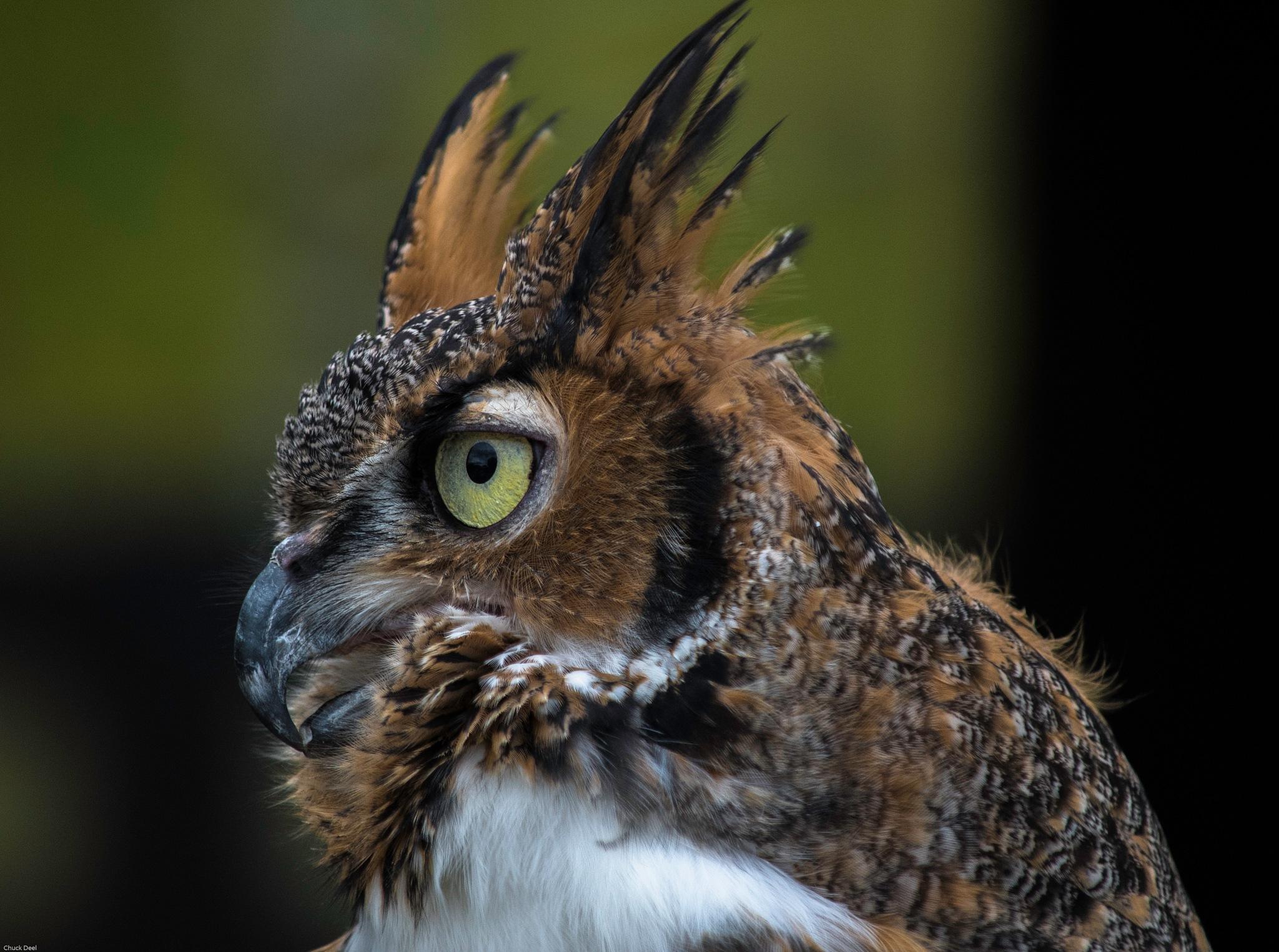 Louisville KY Owl by Chuck Deel-Angie Deel