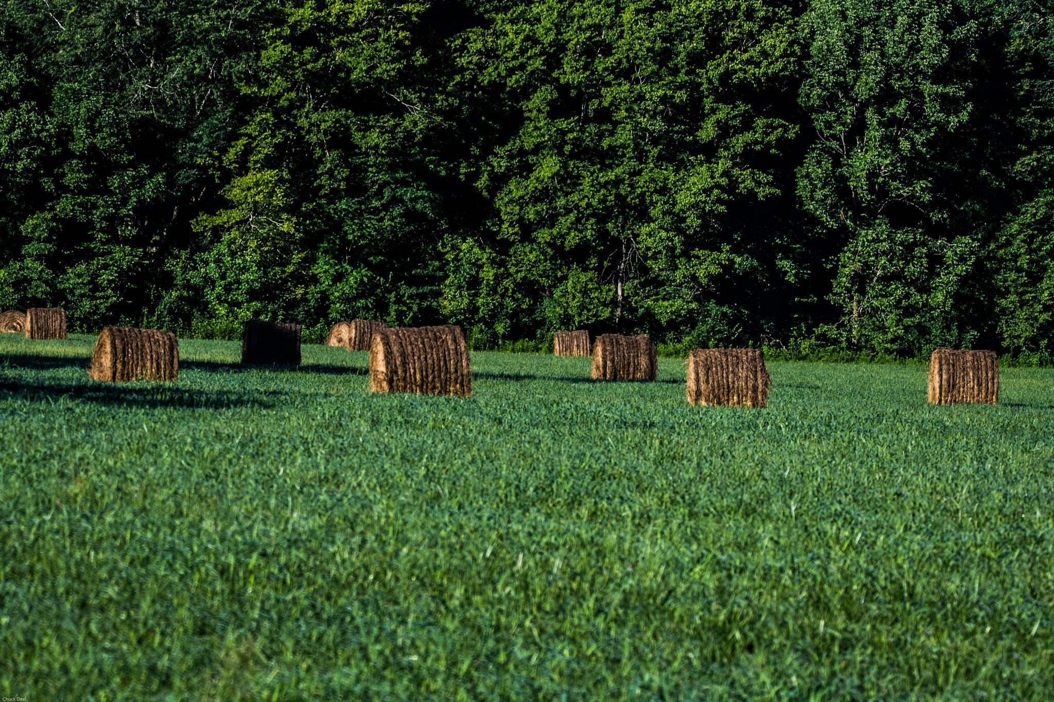 Field of Dreams by Chuck Deel-Angie Deel