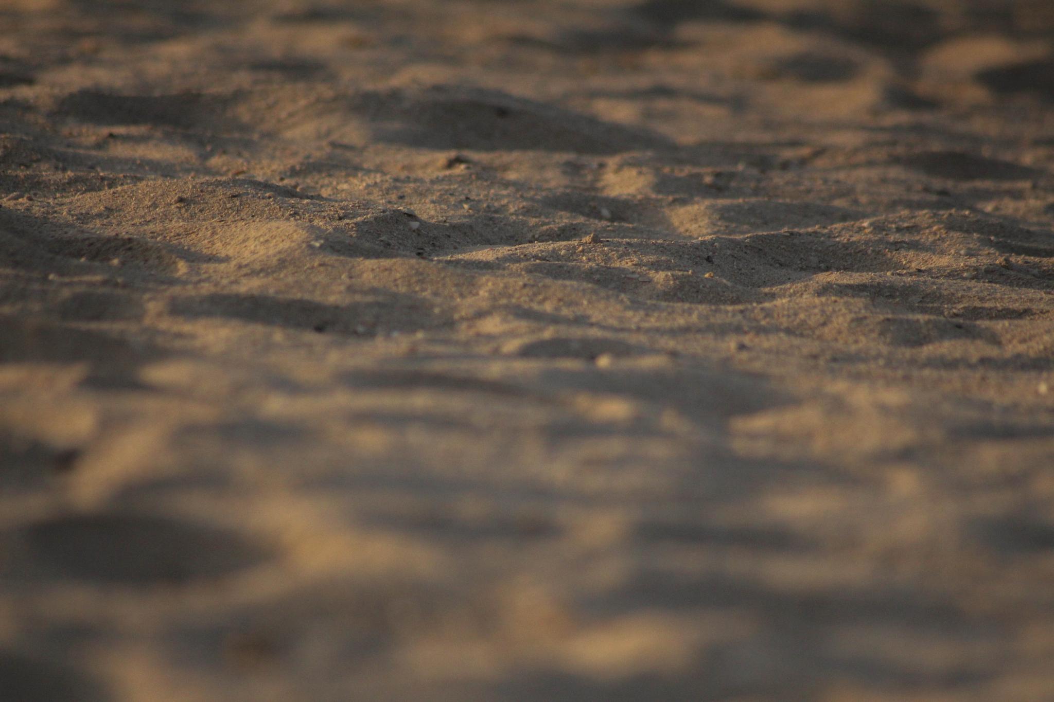 Sand tracks by Umar Shaiq