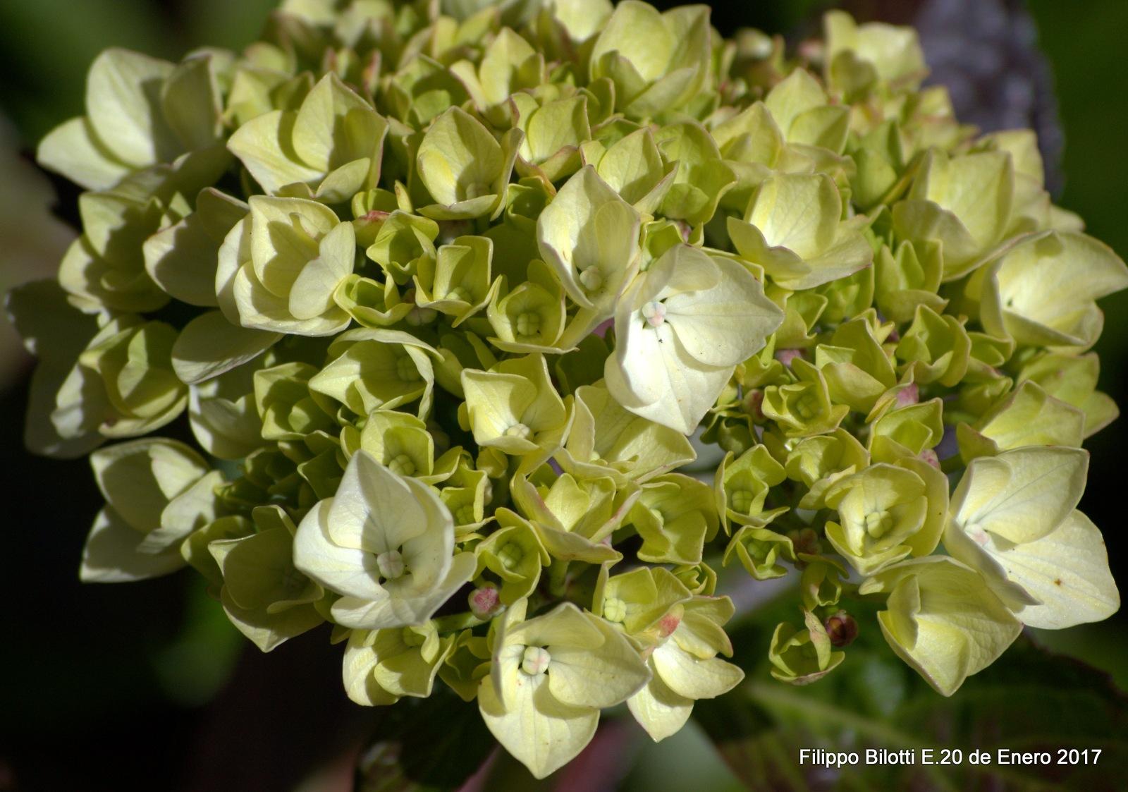 Todas juntas hacemos una gran flor. by FilippoBilottiE