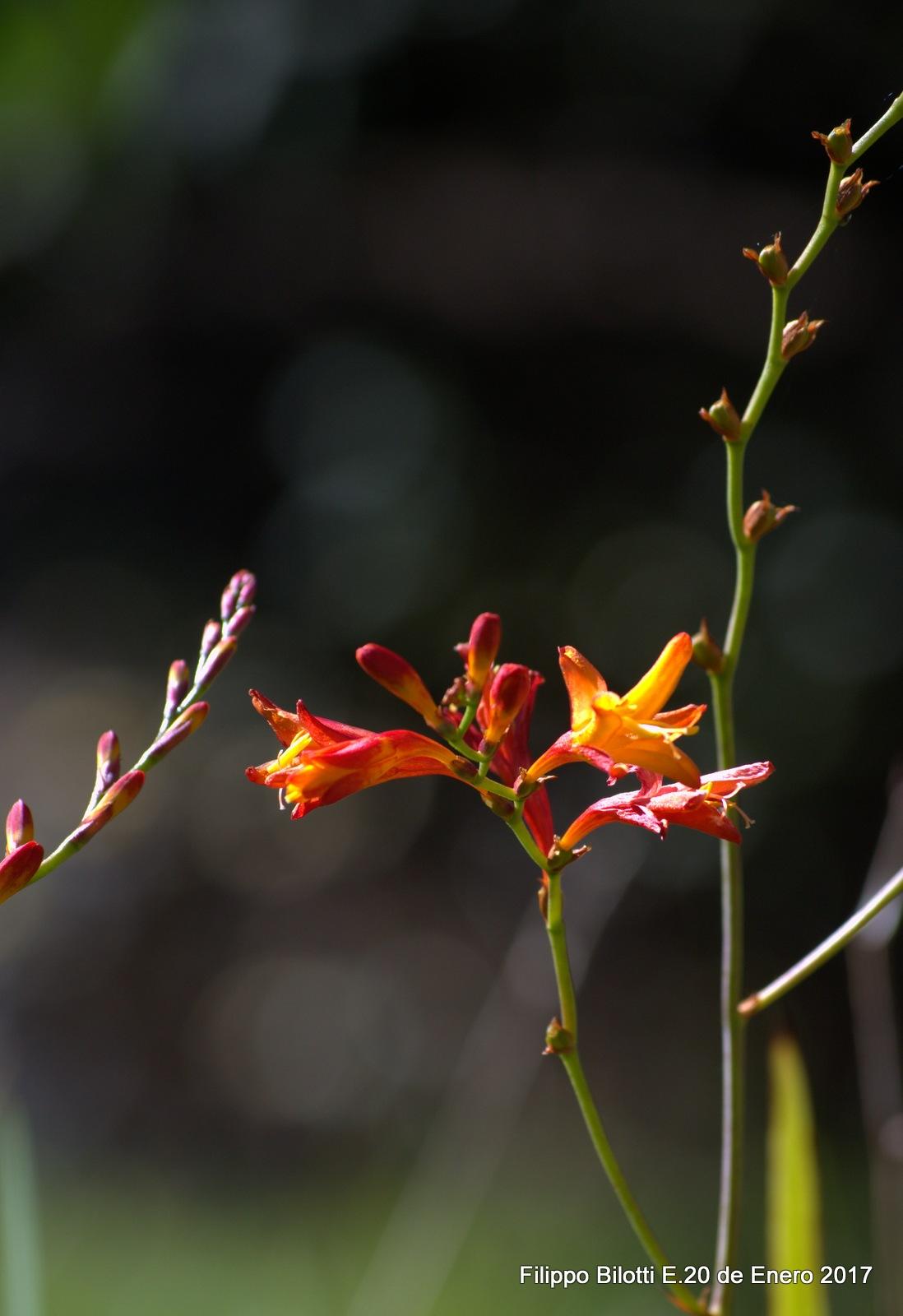 Pequeña flor. by FilippoBilottiE