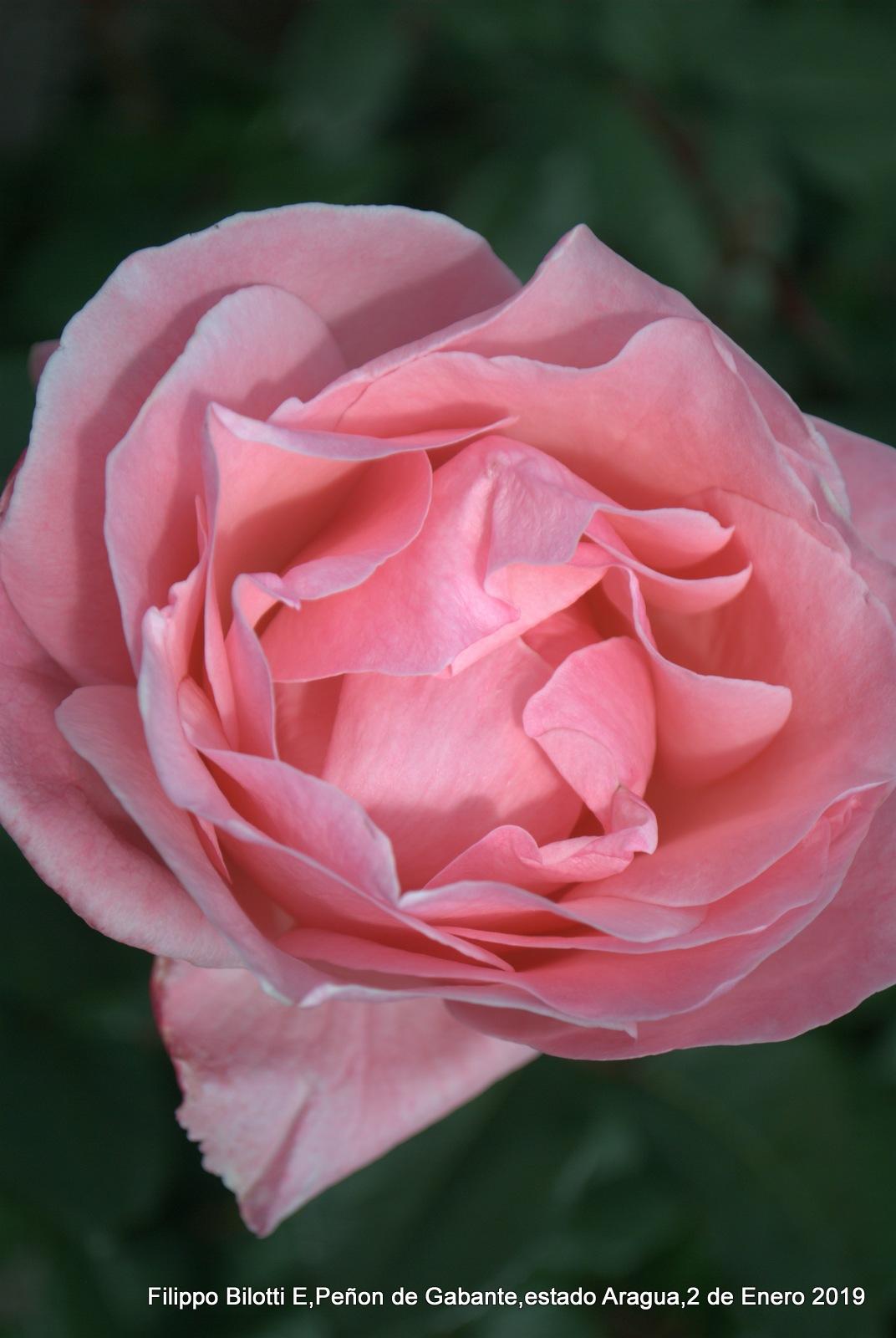 Rosada desde arriba. by FilippoBilottiE