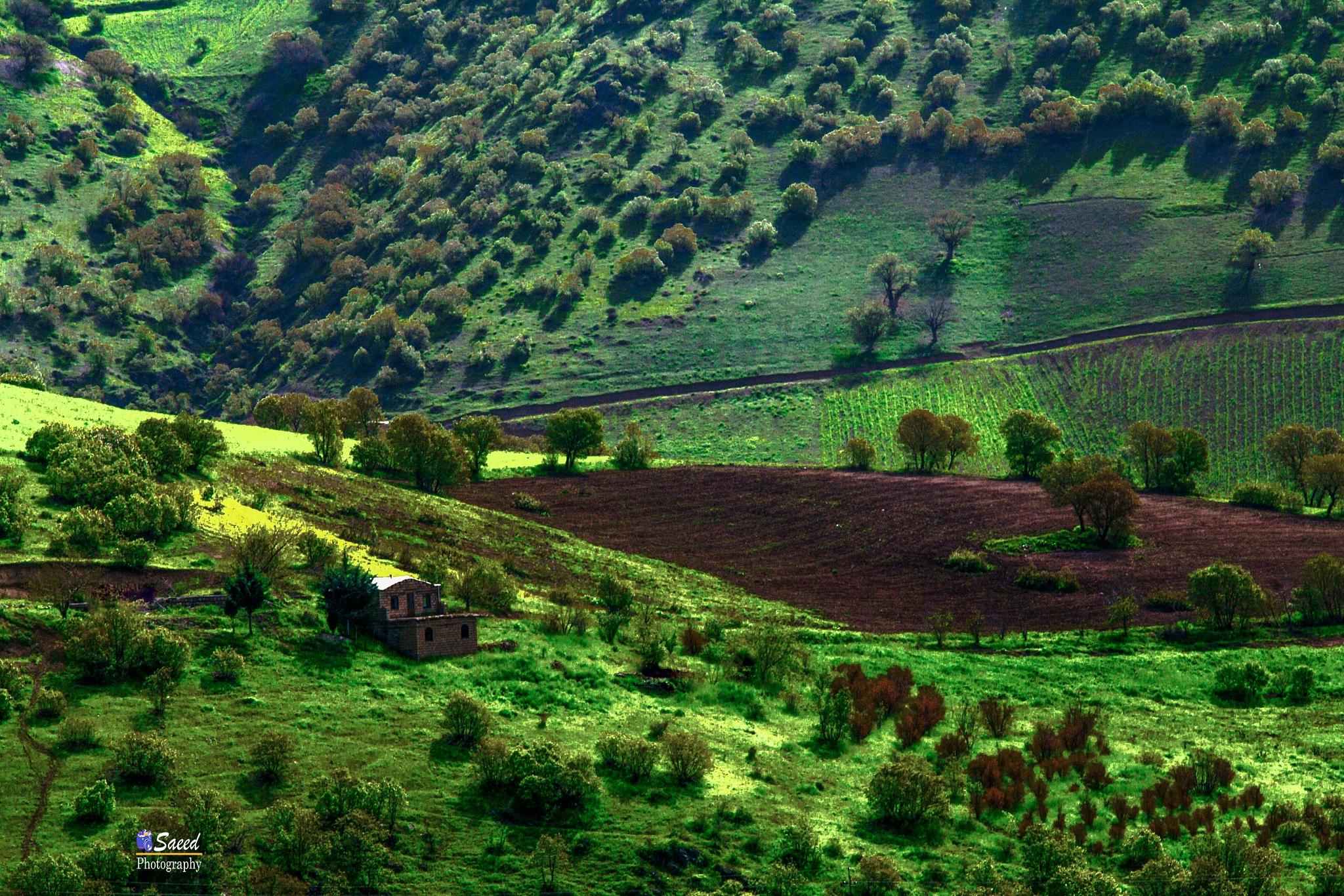 green by Saeed Khansarian