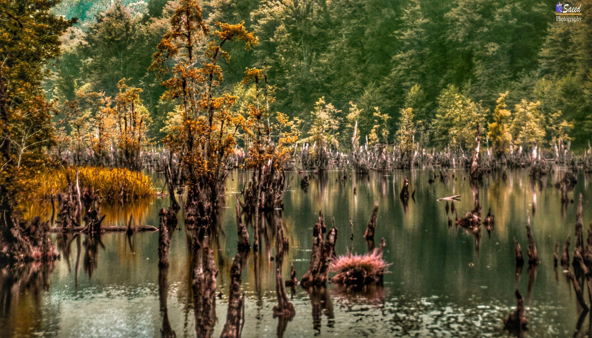 Wetlands Spirits by Saeed Khansarian