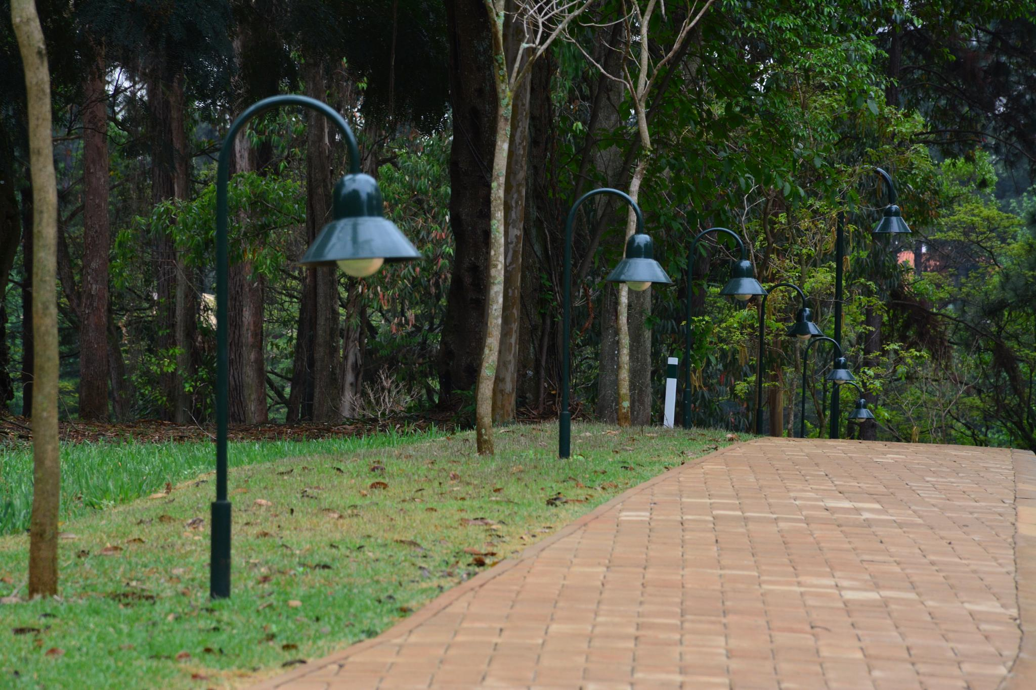 Caminho Iluminado by Wilton Esteves