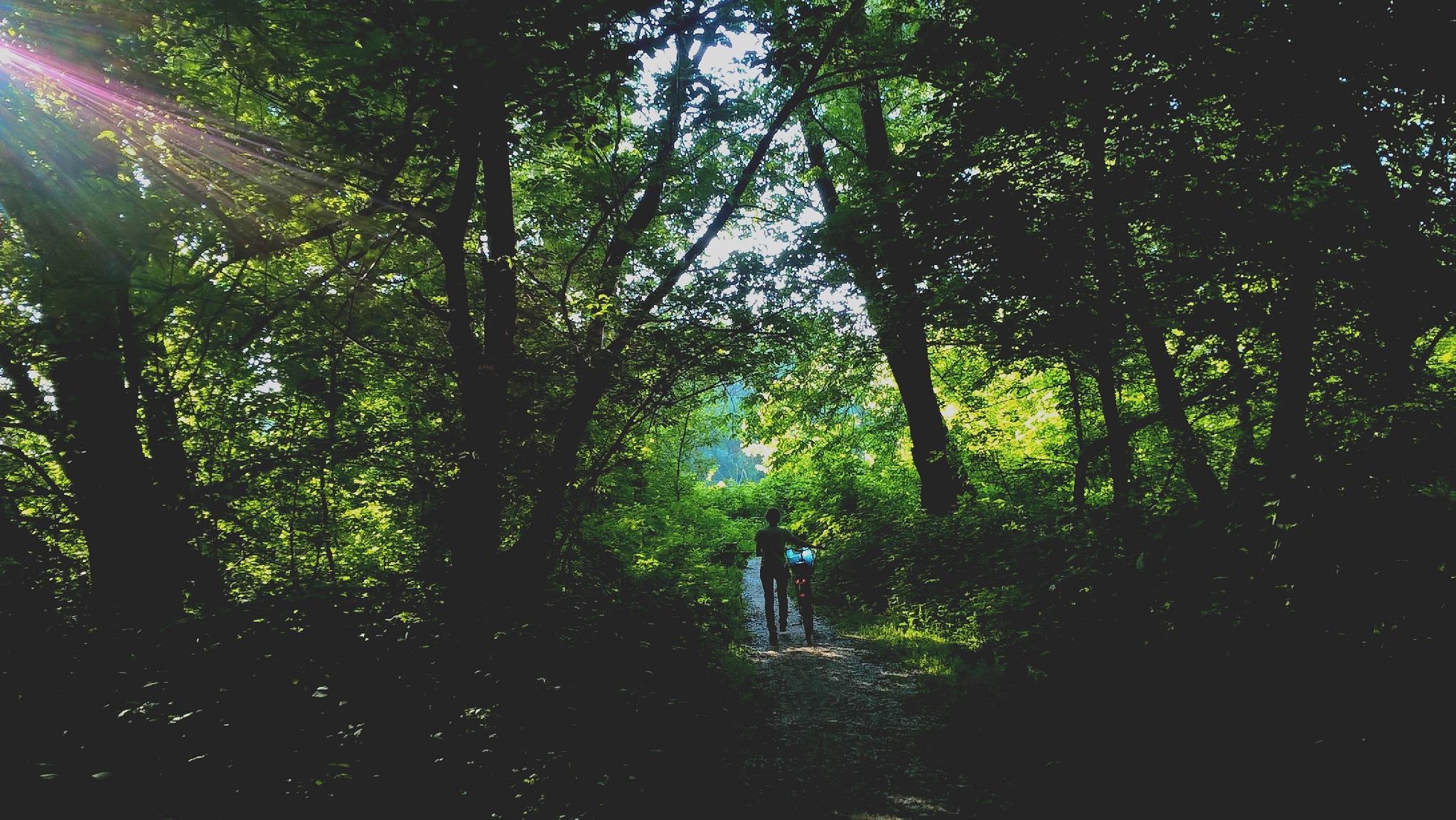 into the wood by kiwimonkeyos