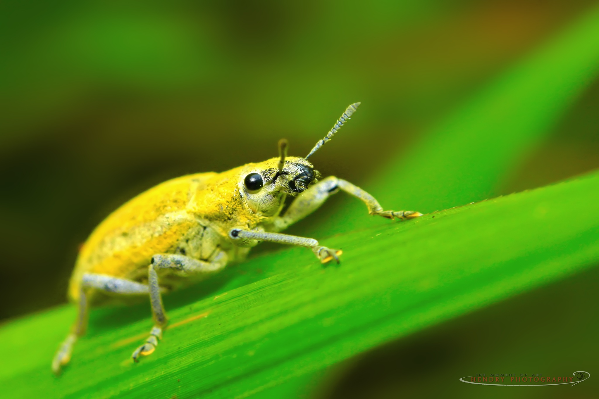 Mr.Yellow Bug by Hendry OK