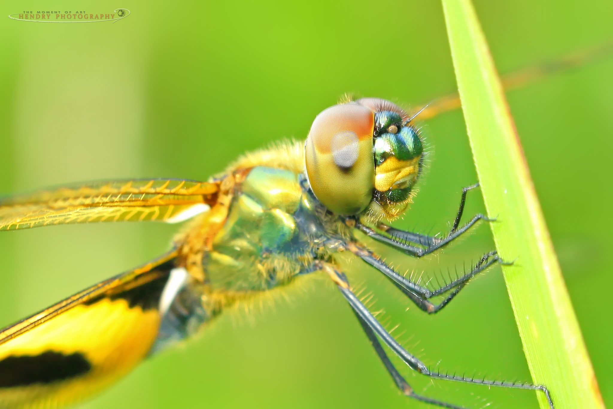Dragonfly act.. by Hendry OK