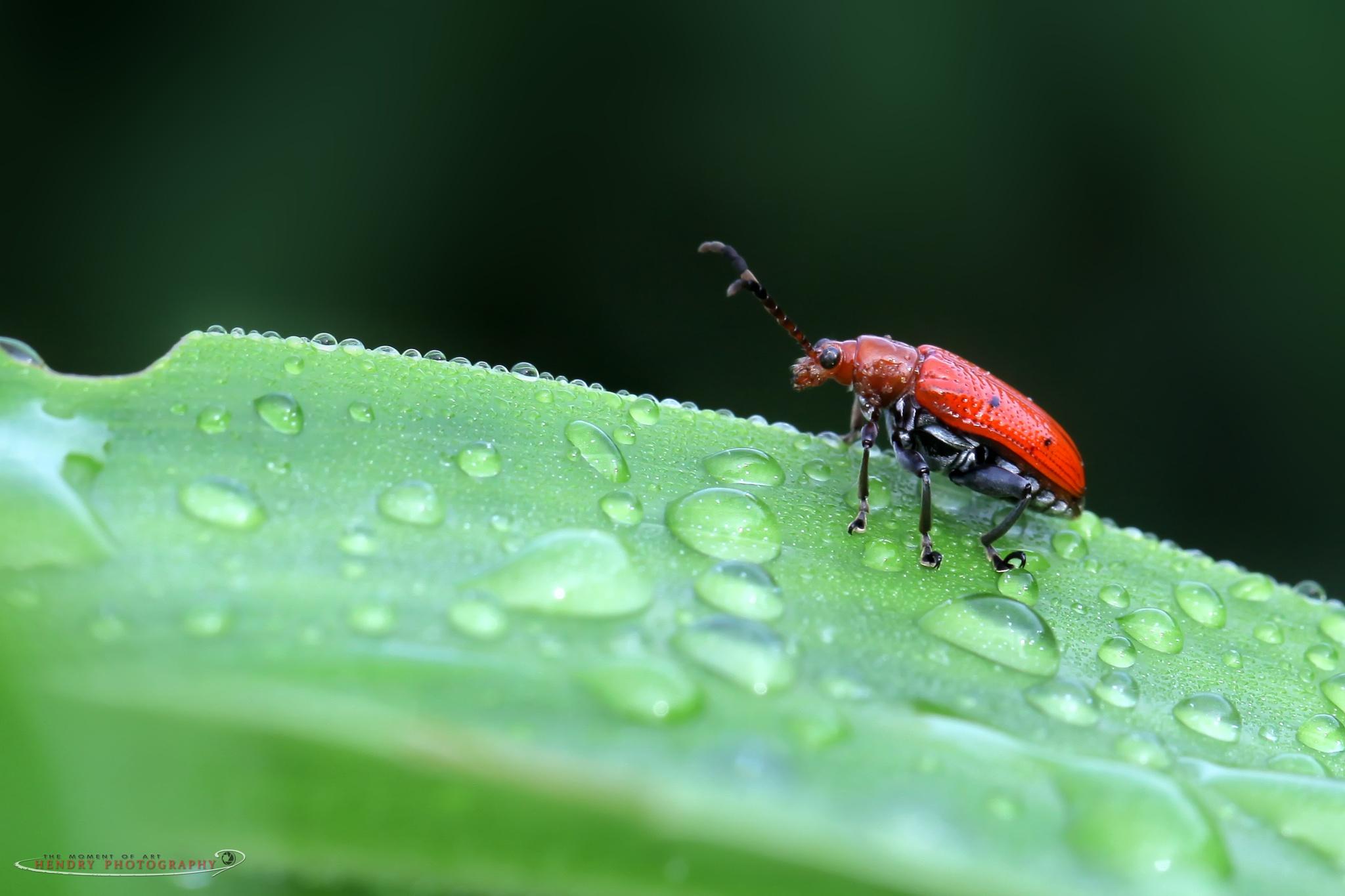 Mr. Bug Alone  by Hendry OK