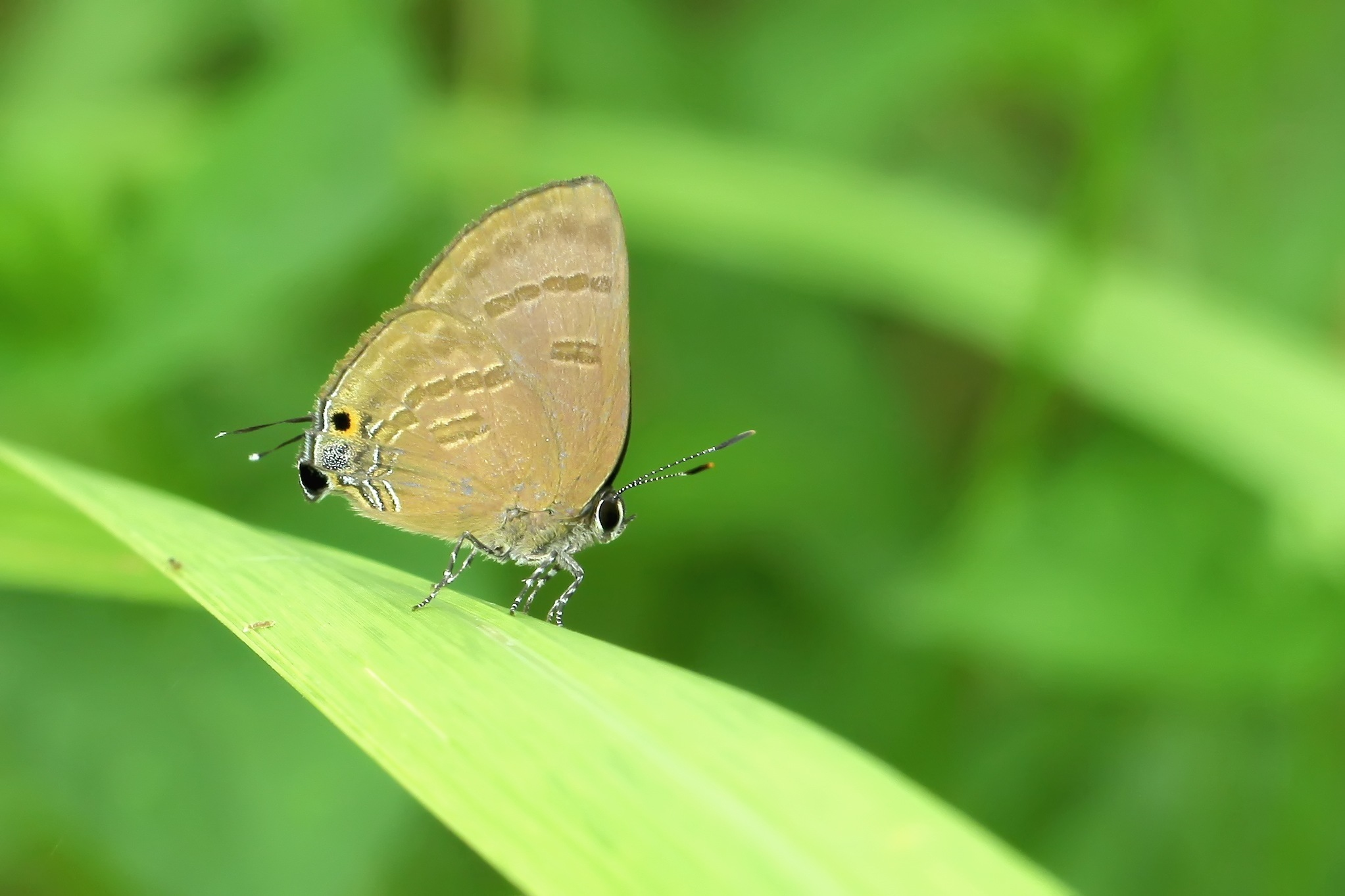 Butterfly act by Hendry OK
