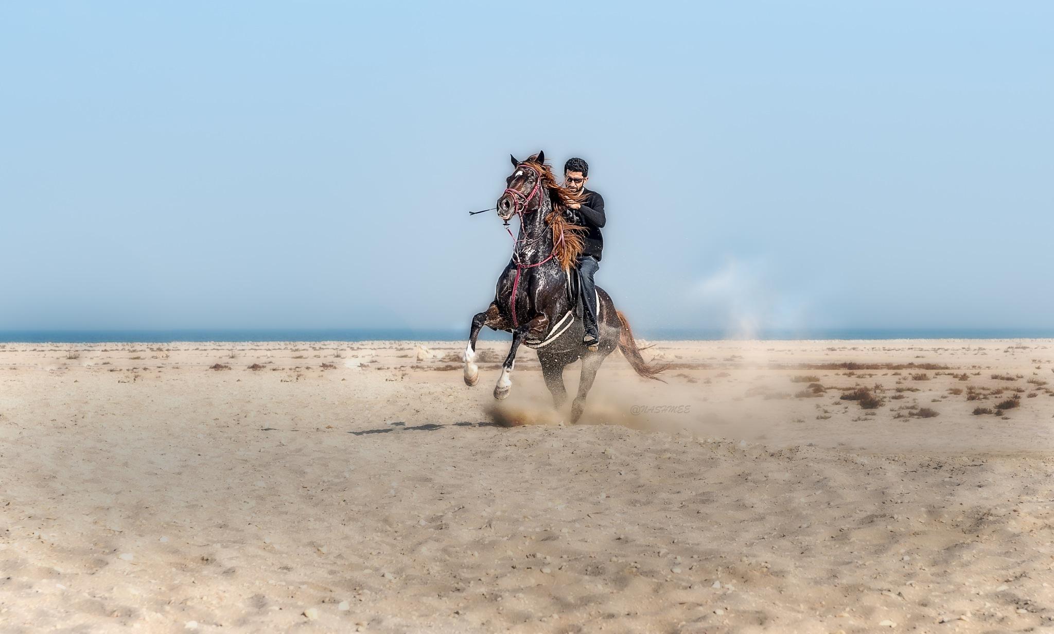 Beautiful Horse  by Ali