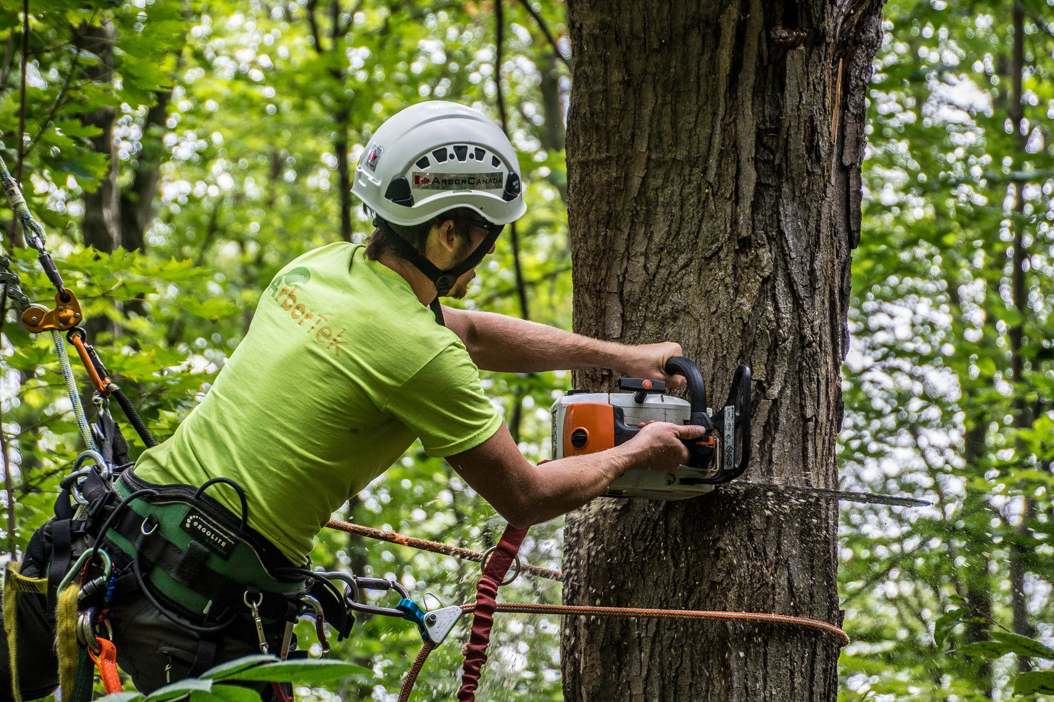 ArborTek Tree Services 4 by SteveRedmond
