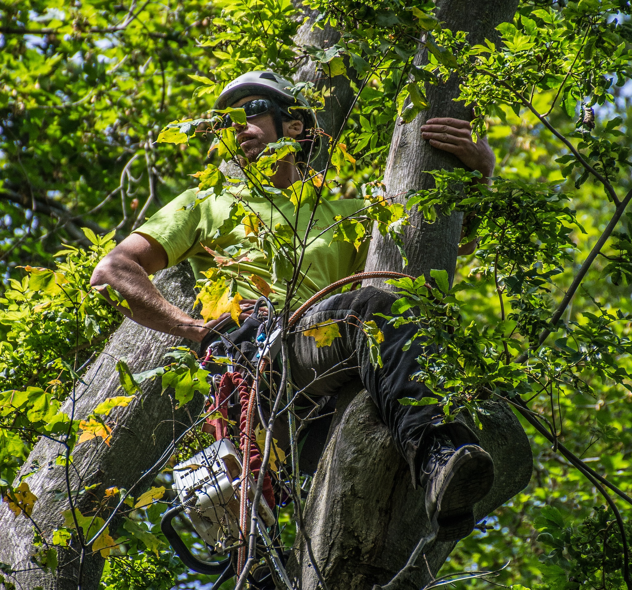 ArborTek Tree Services 1 by SteveRedmond