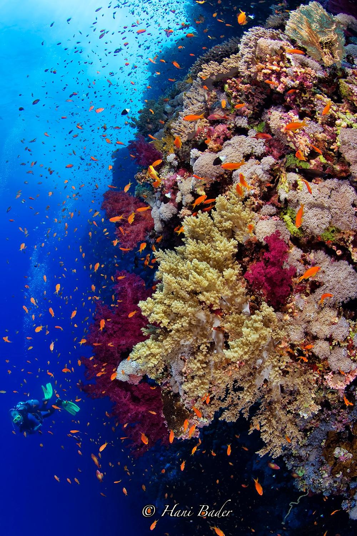 Bigbrather Island Egypt  by Hani Bader