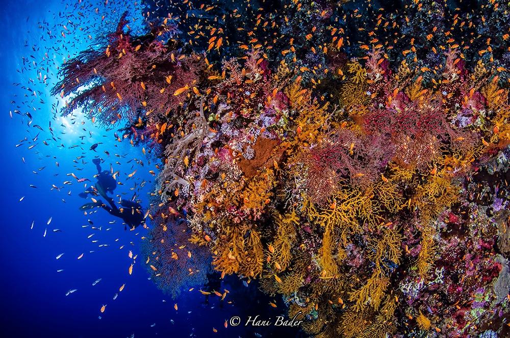 Untitled by Hani Bader