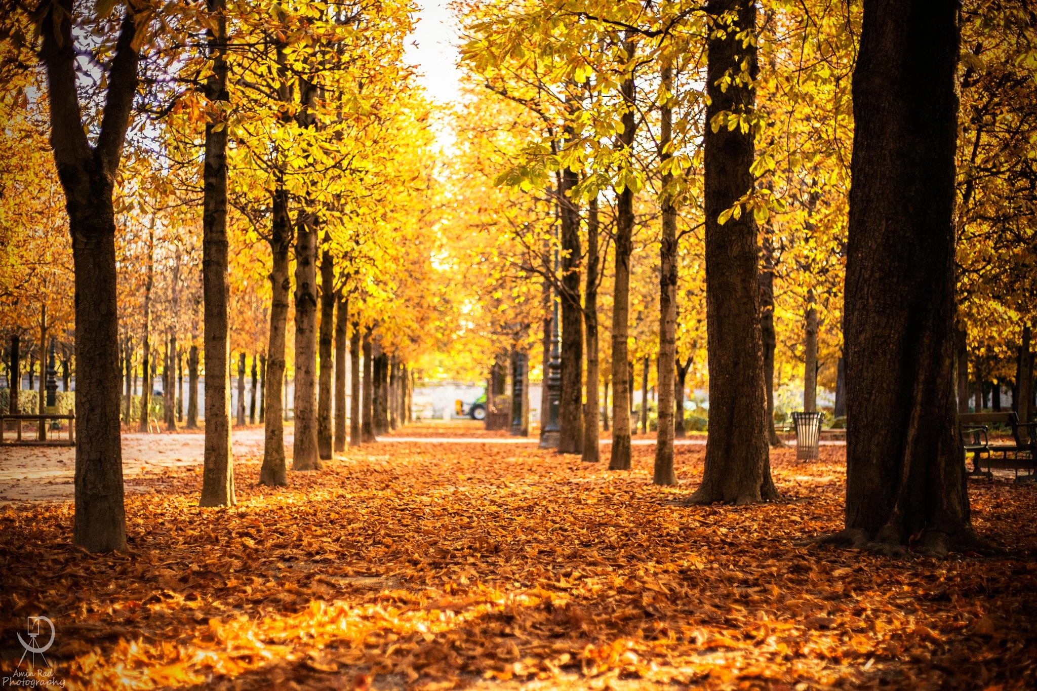 Fall by AminRad