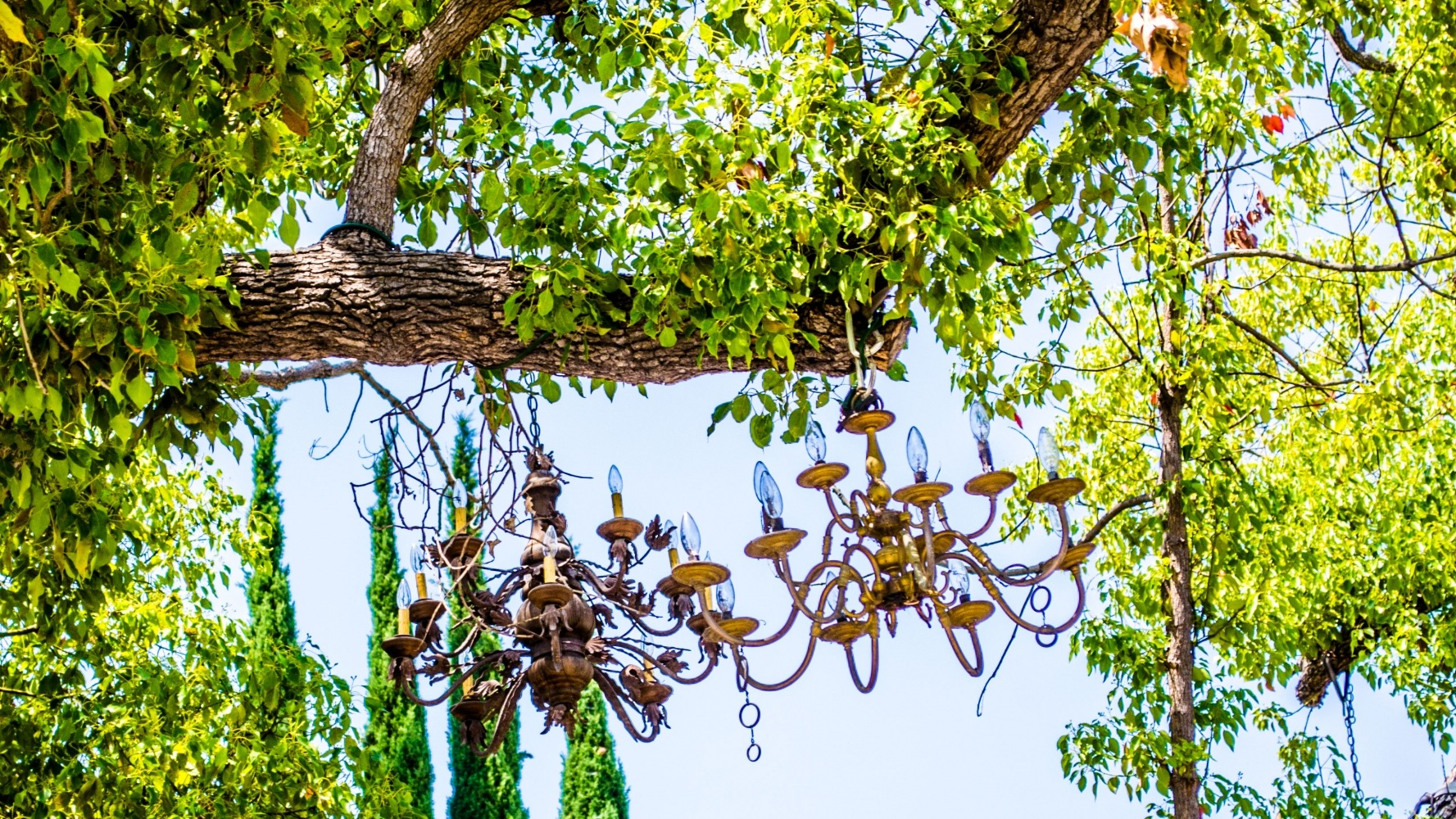 Chandeliers on a Tree in Los Angeles by friendlylocalguides