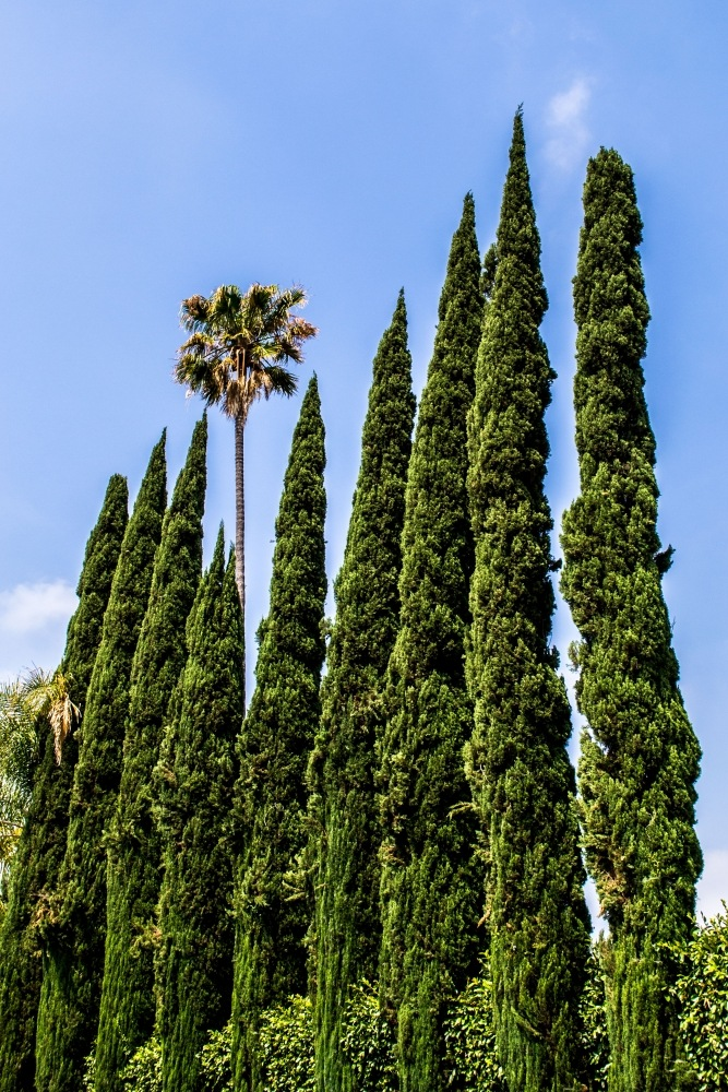 Palms and Trees in LA by friendlylocalguides
