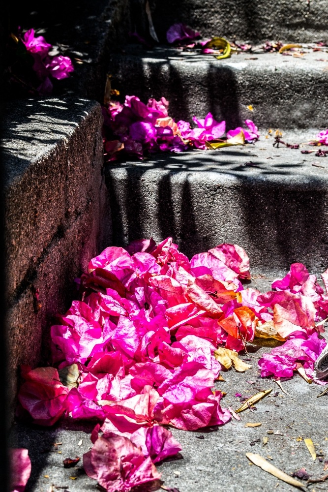 Roses on Stairs on a Summer Day by friendlylocalguides