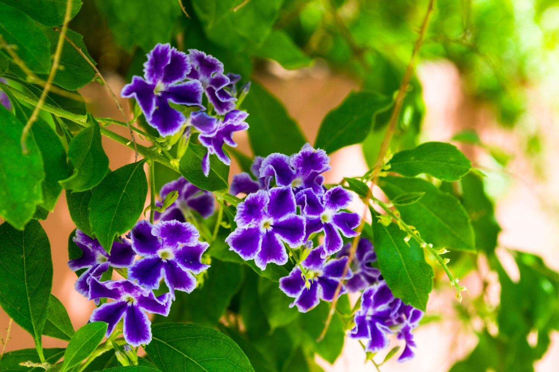 Summer Flower by friendlylocalguides