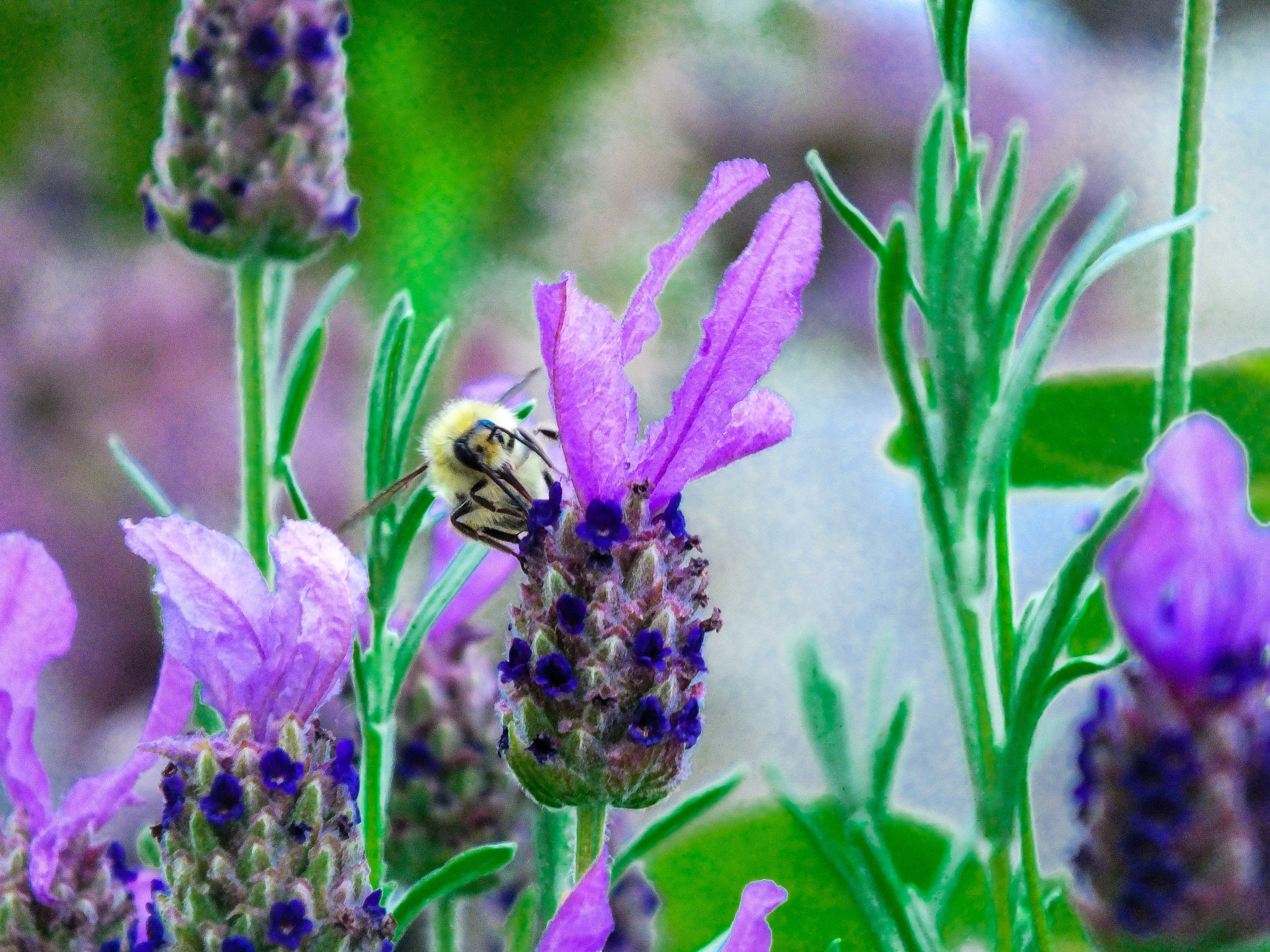 Life of a Bee  by BexPixPhotography