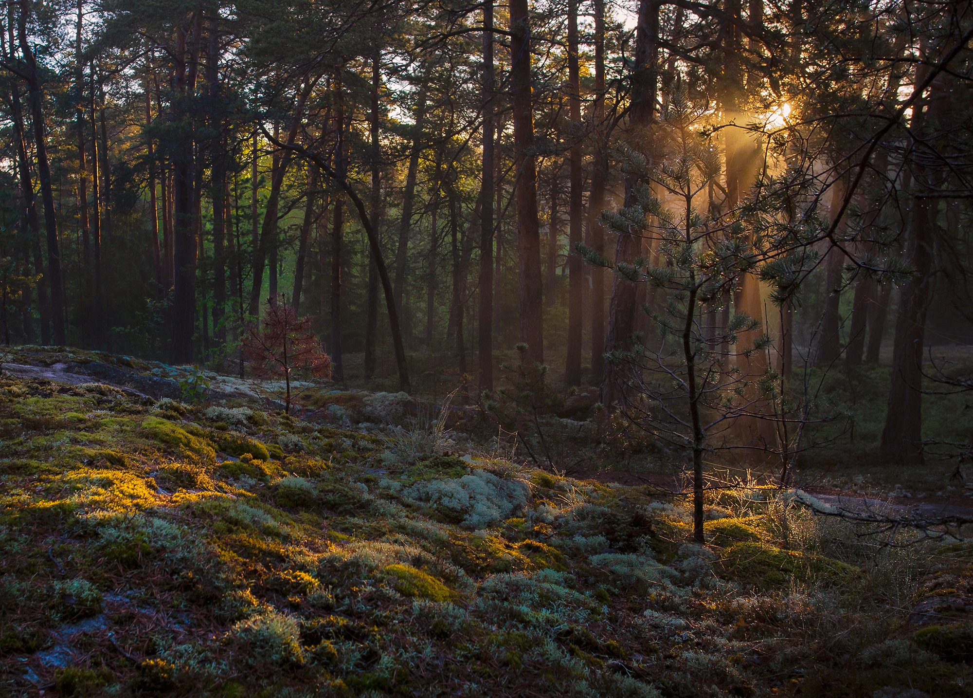 в Финском лесу by Kley Sergey