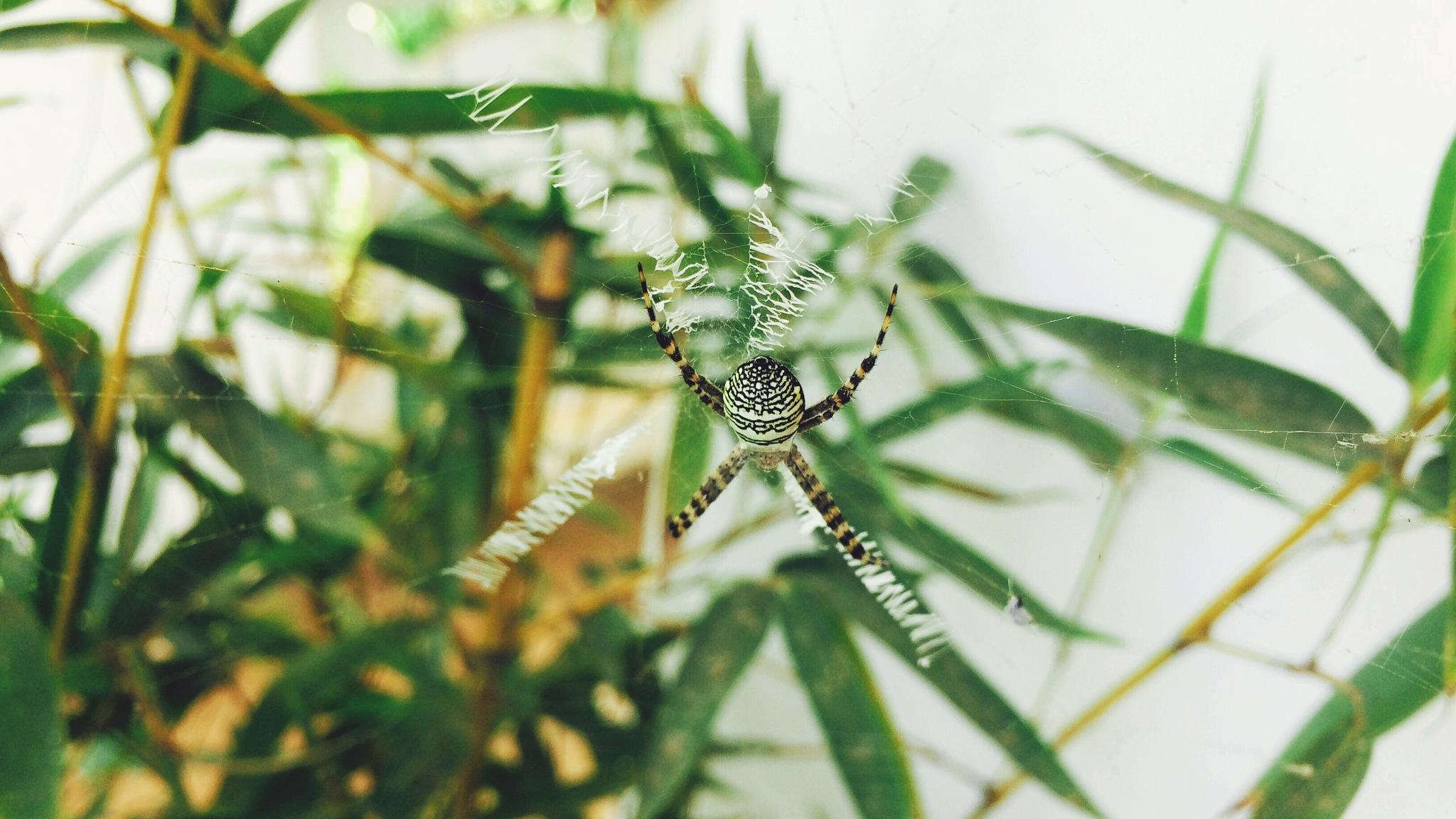 Spider by Abdullah Azhar