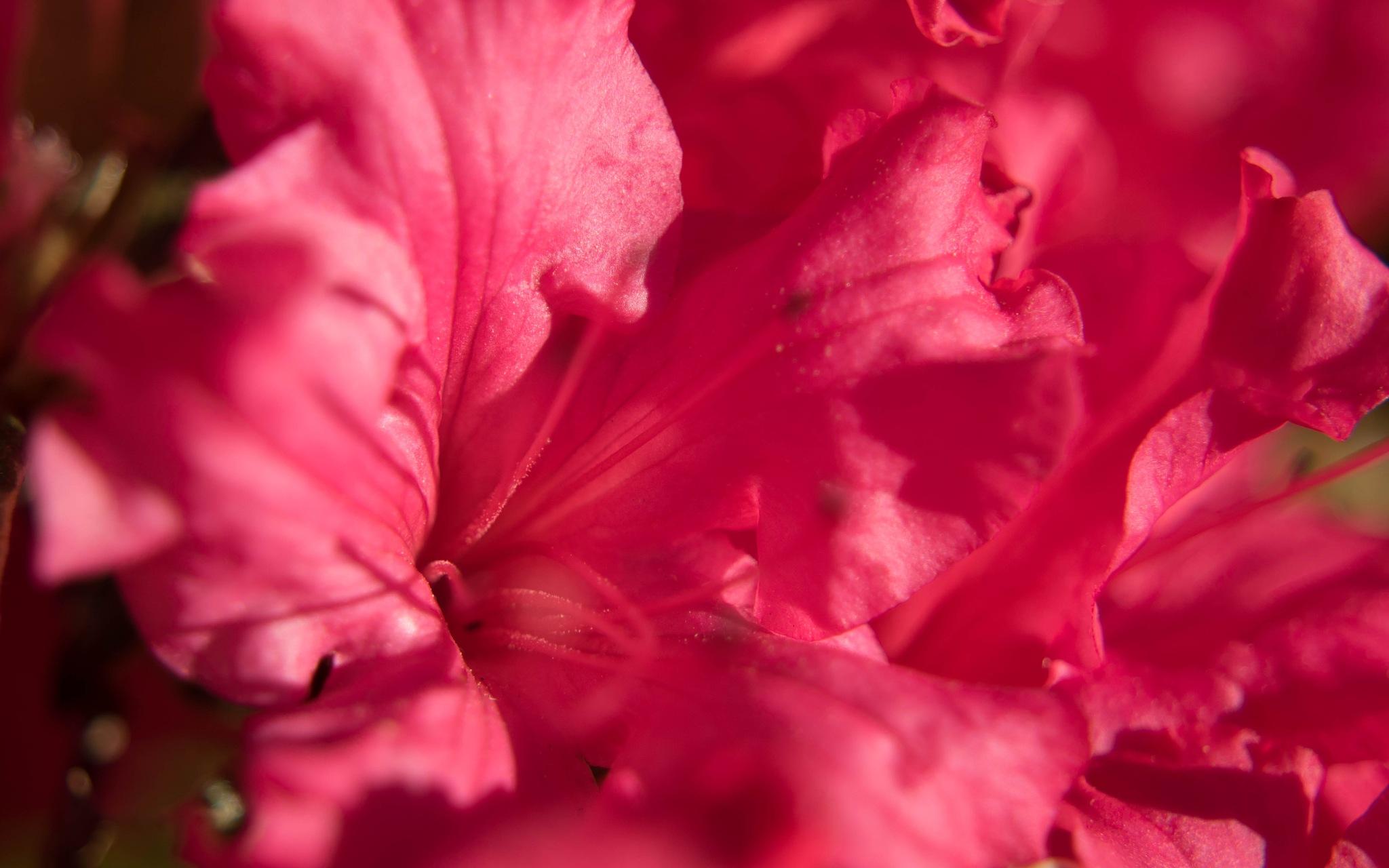 pinkie by freshairthings