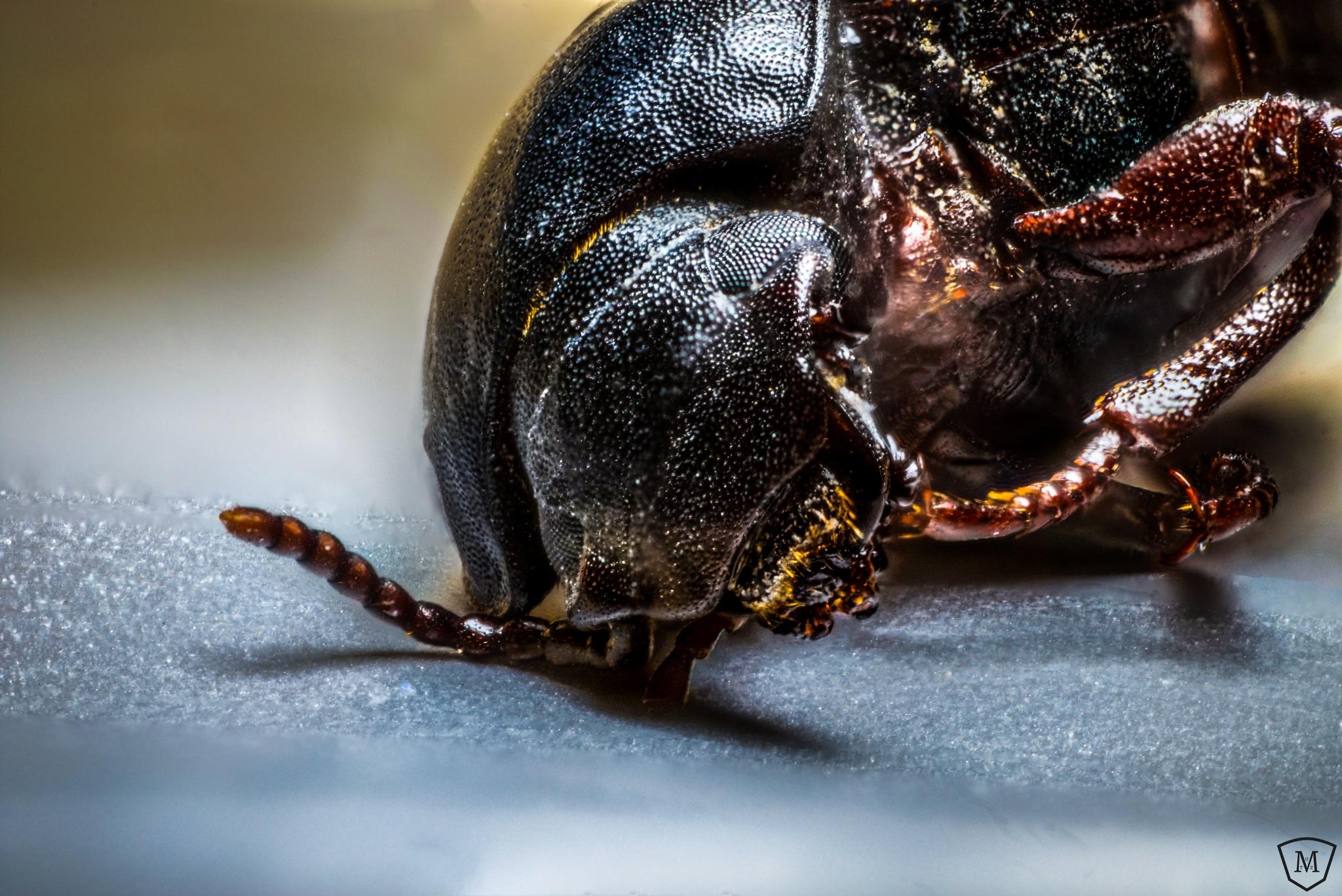 Dead bug by Martin Mutz
