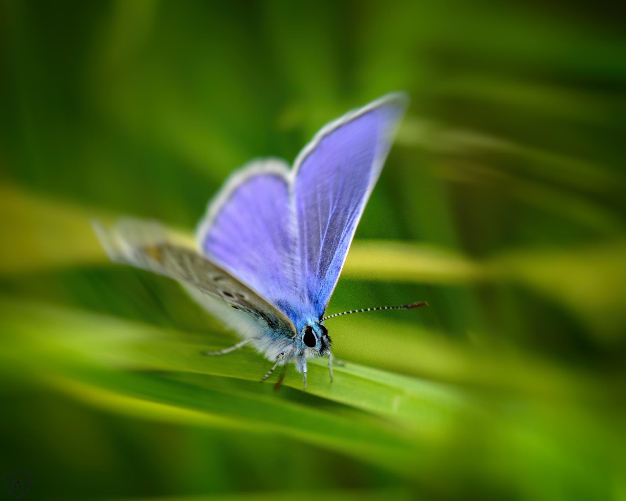 Butterfly by Martin Mutz