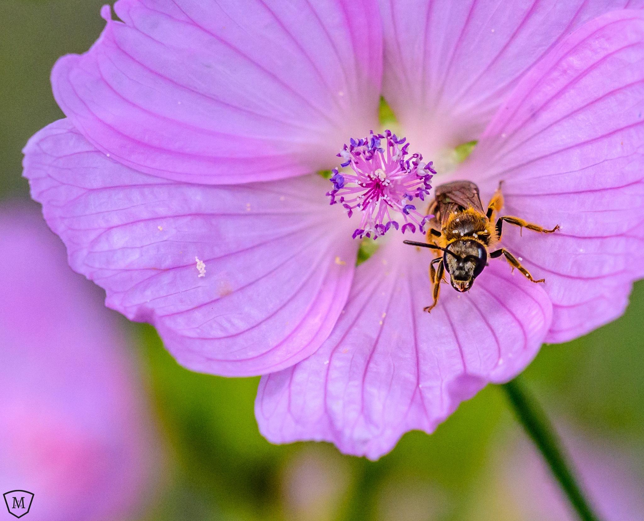 Bee by Martin Mutz