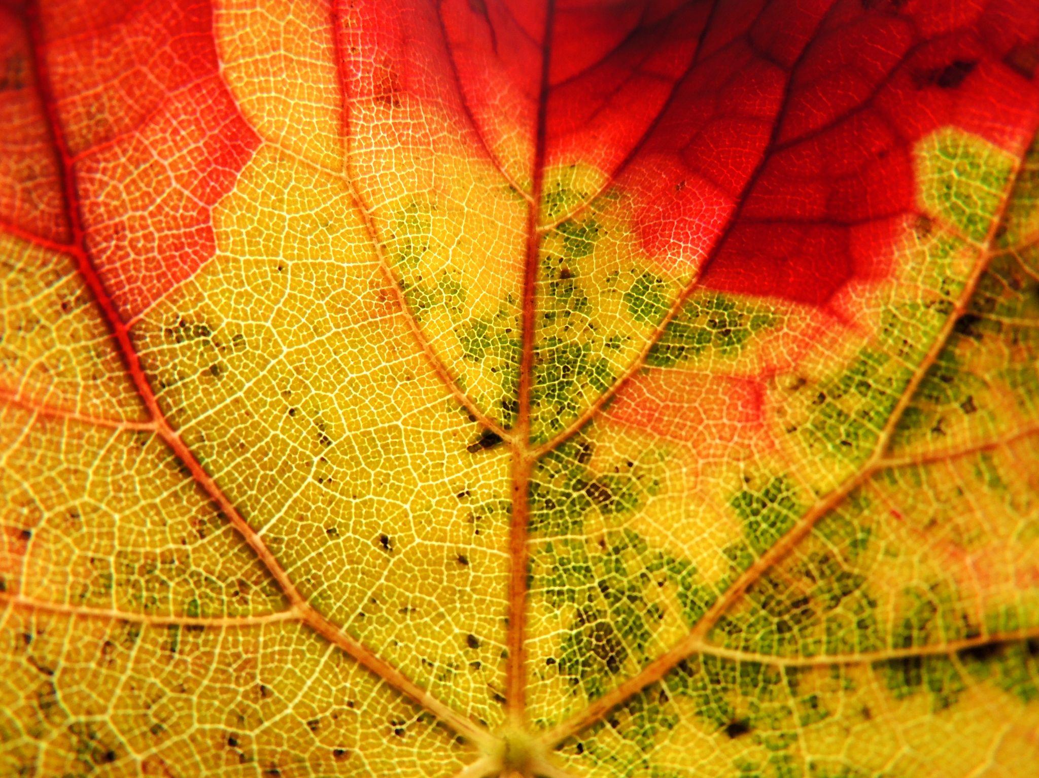colores by Pedro J. Luque González