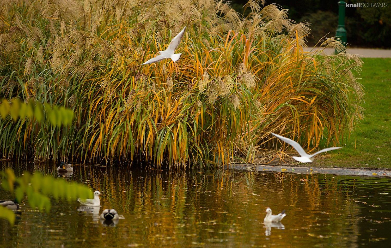 Möven am Teich by Charlie Schwarz