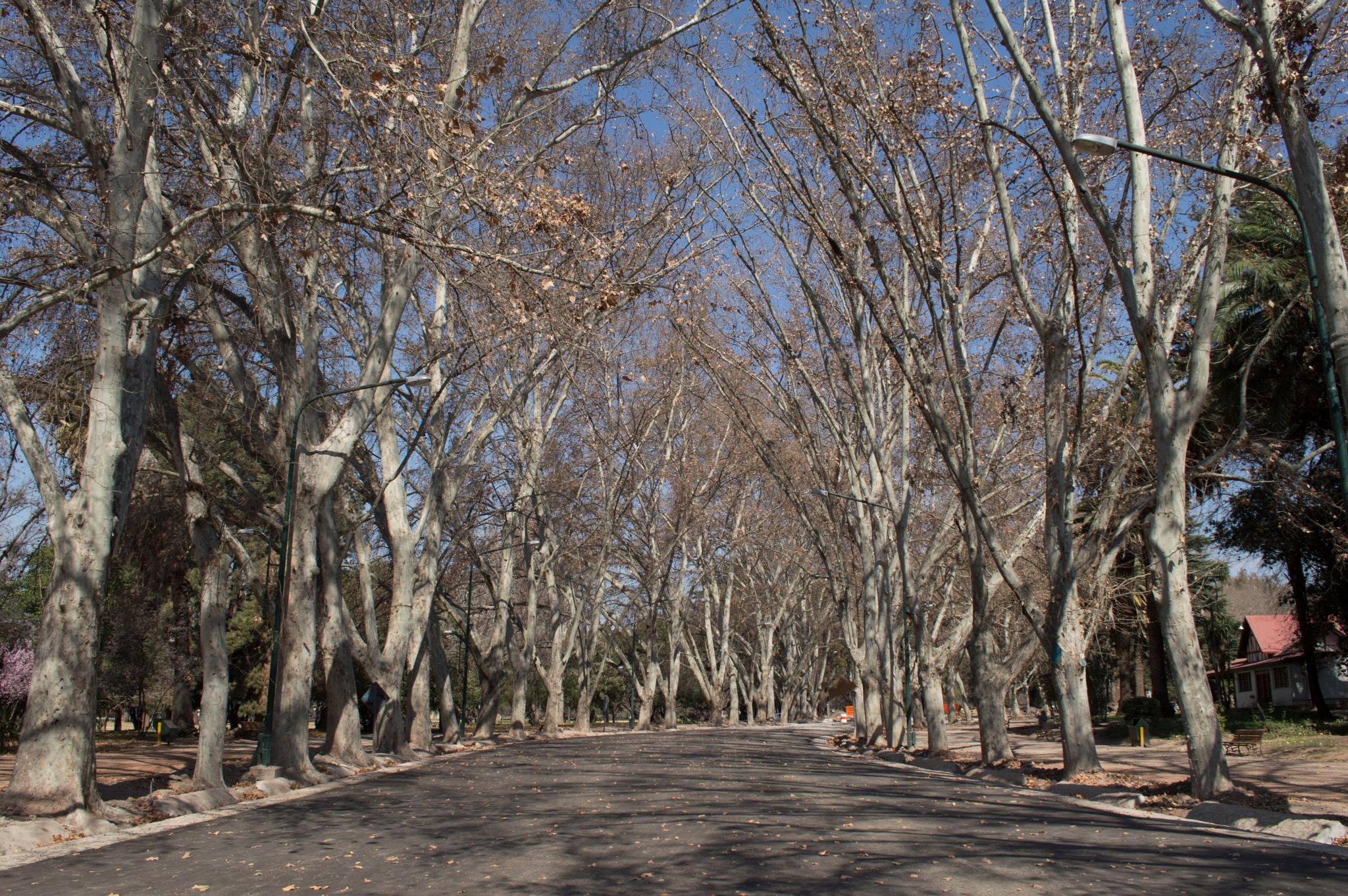 Invierno en Mendoza by AideeRo