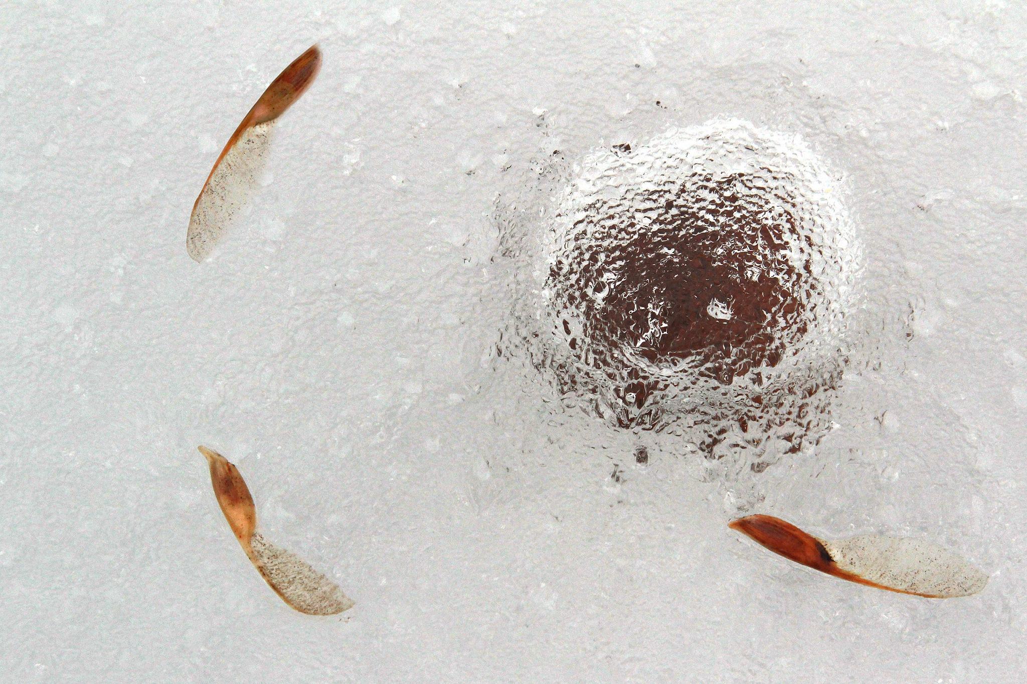 frozen leaf by Sladjan Tasic