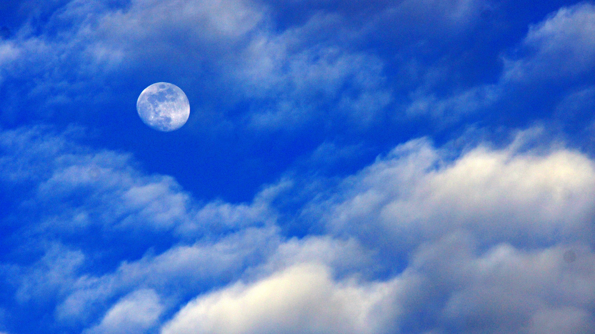 Blue Sky Green Leaves by Troi Santos