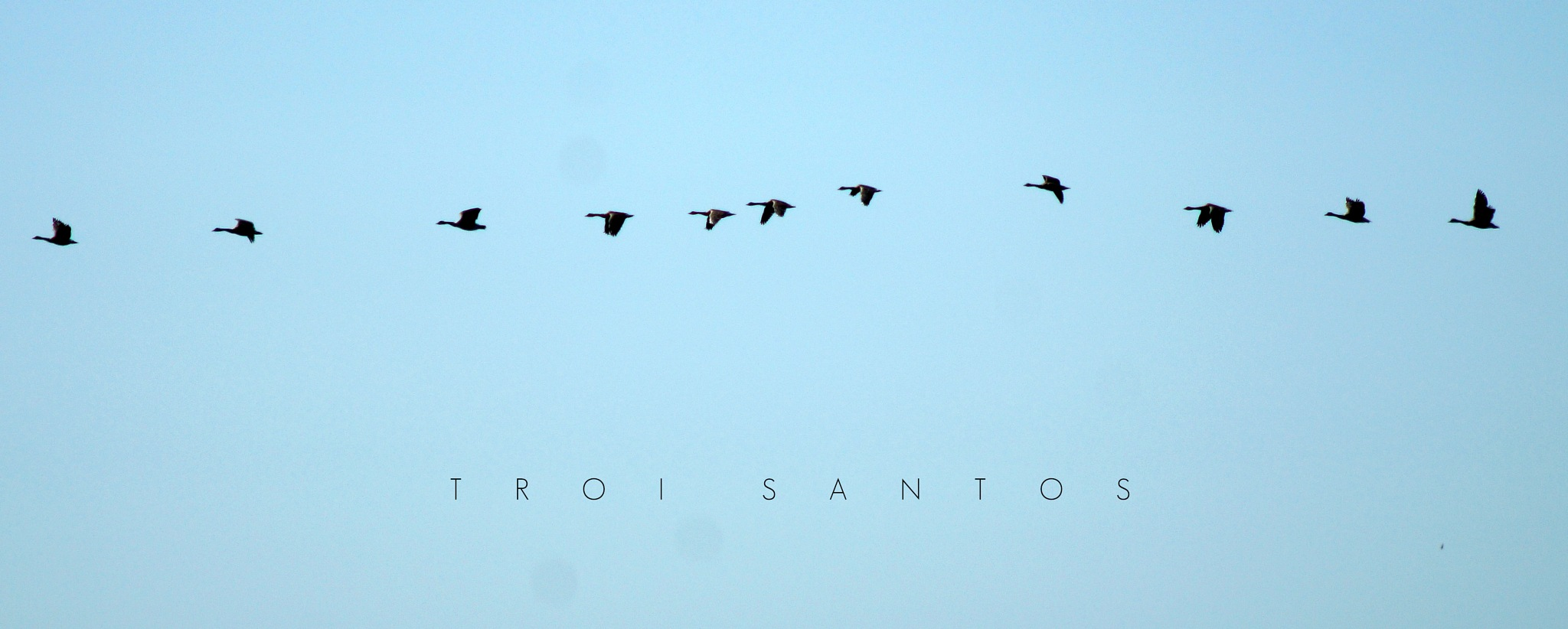 FALL MIGRATION by Troi Santos
