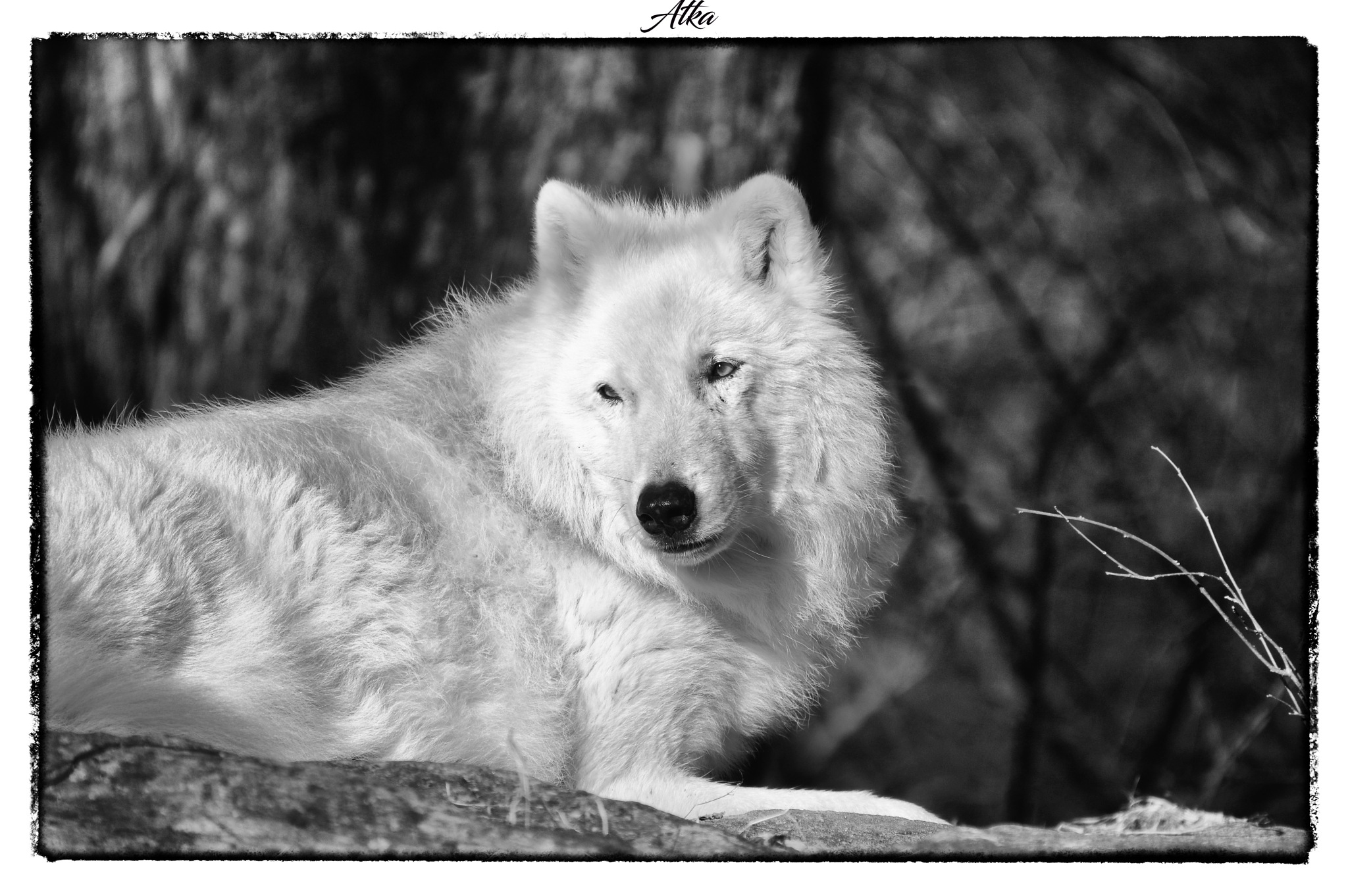 Atka  by RichardABusch