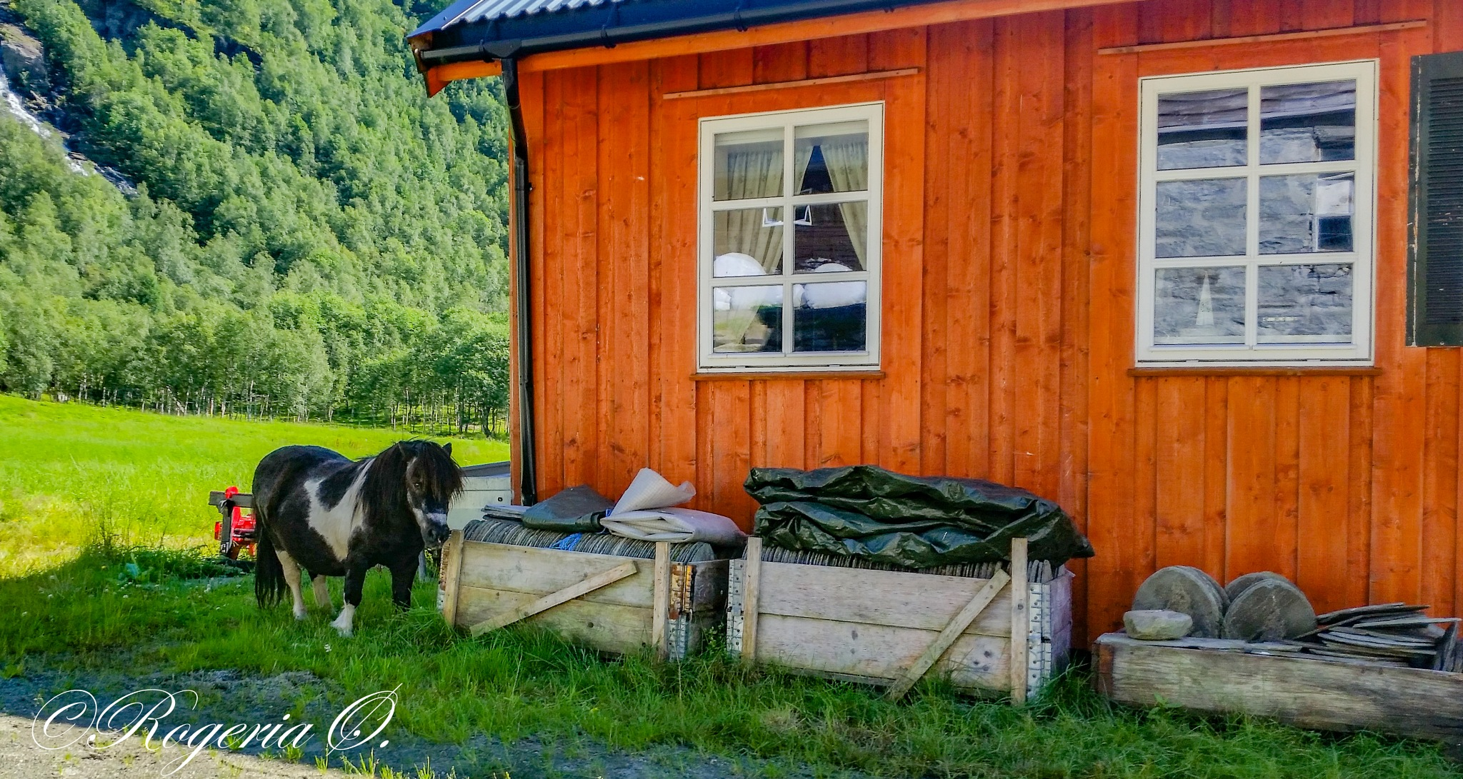 Norwegian miniature horse by Rogeria Øksendal
