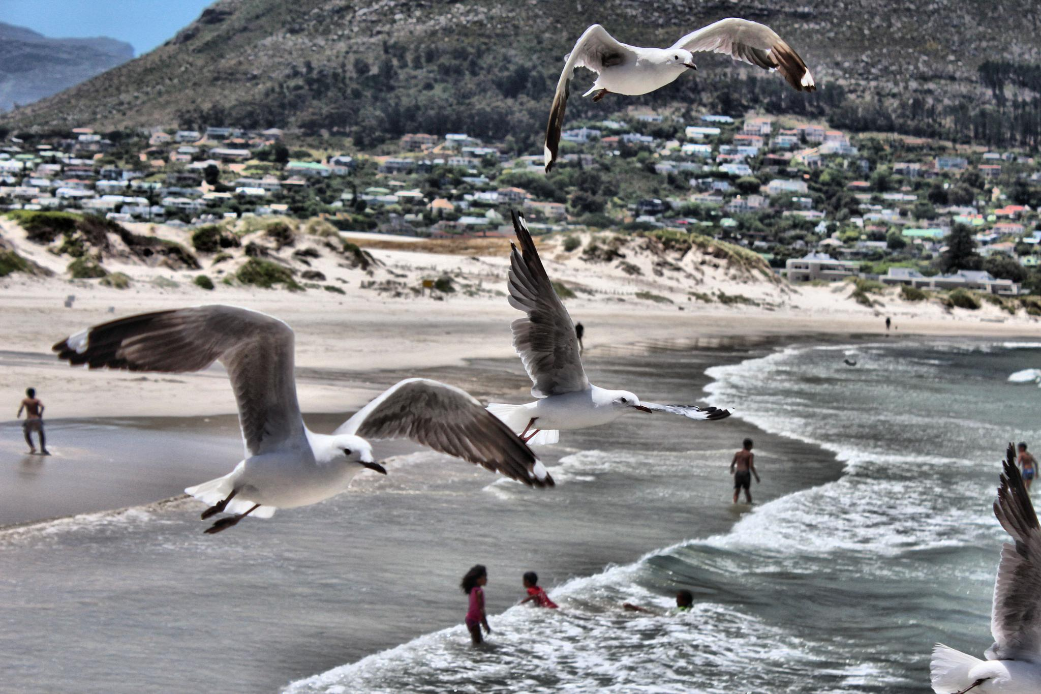birds by Debbie Smith