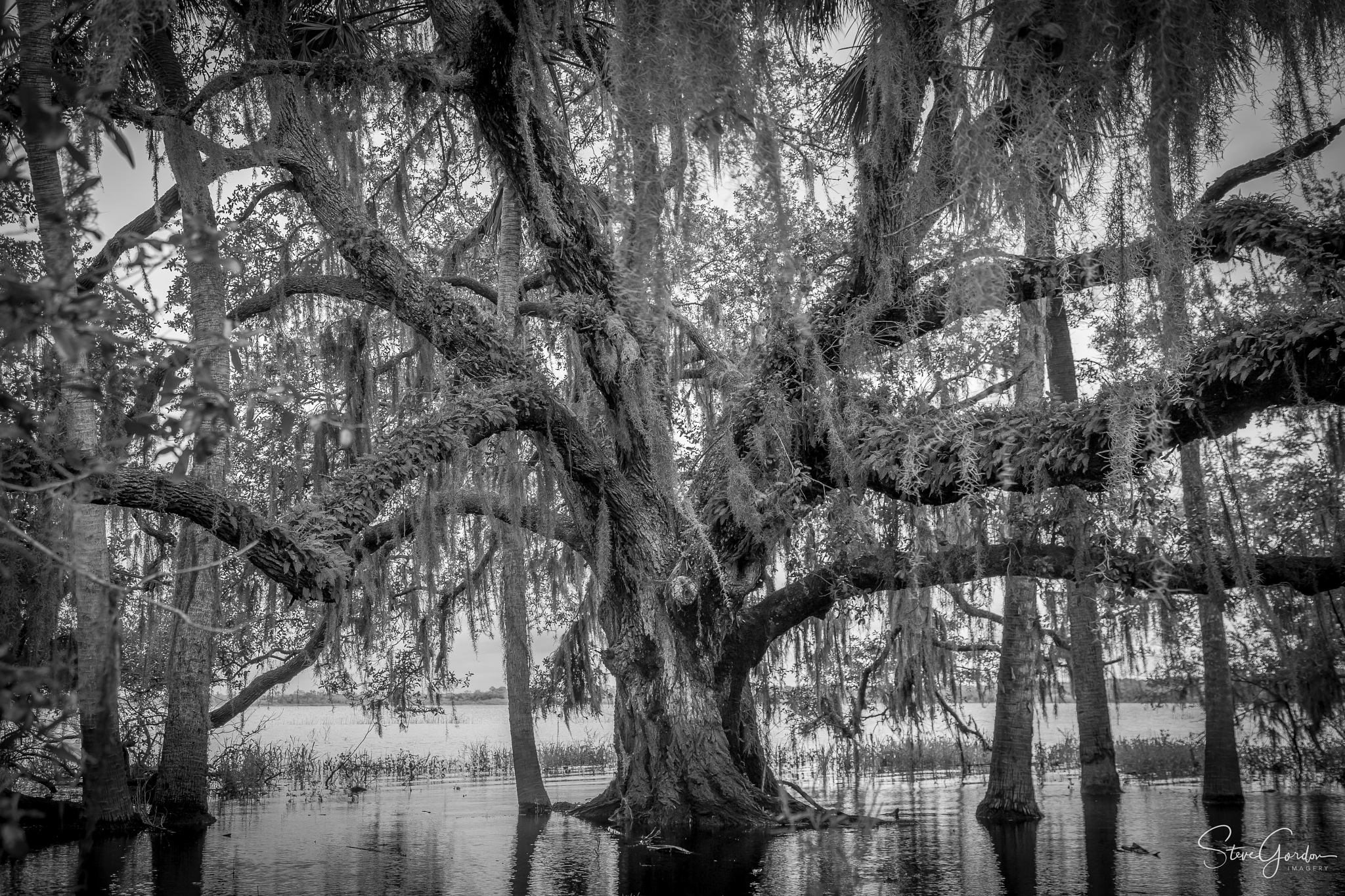 Old sentry of the Lake by Steve Gordon