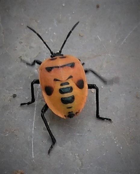 ladybug by Devang Shah