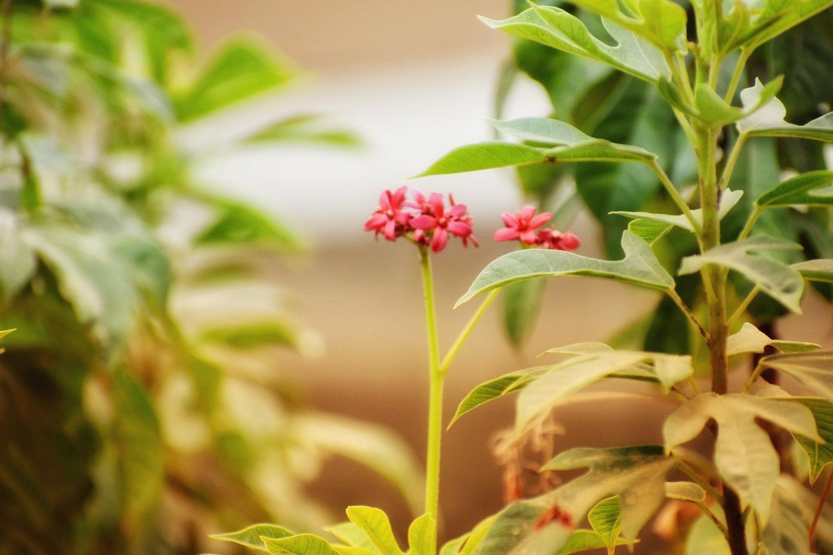 flower by Devang Shah