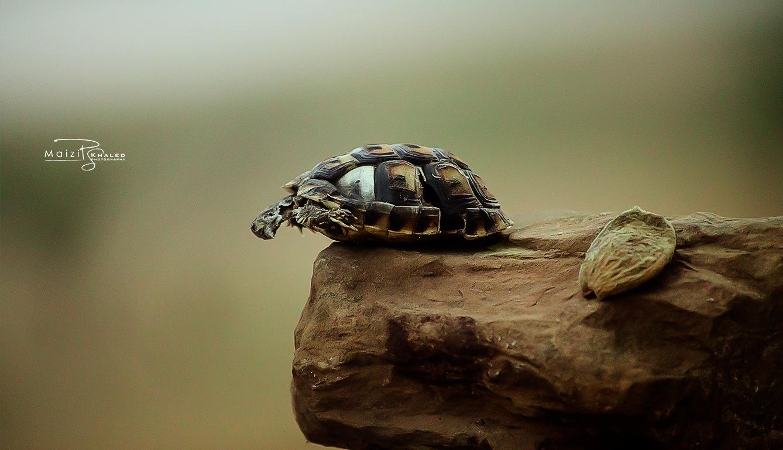 Turtle Skull by 📷 Maizi khaled 🔥