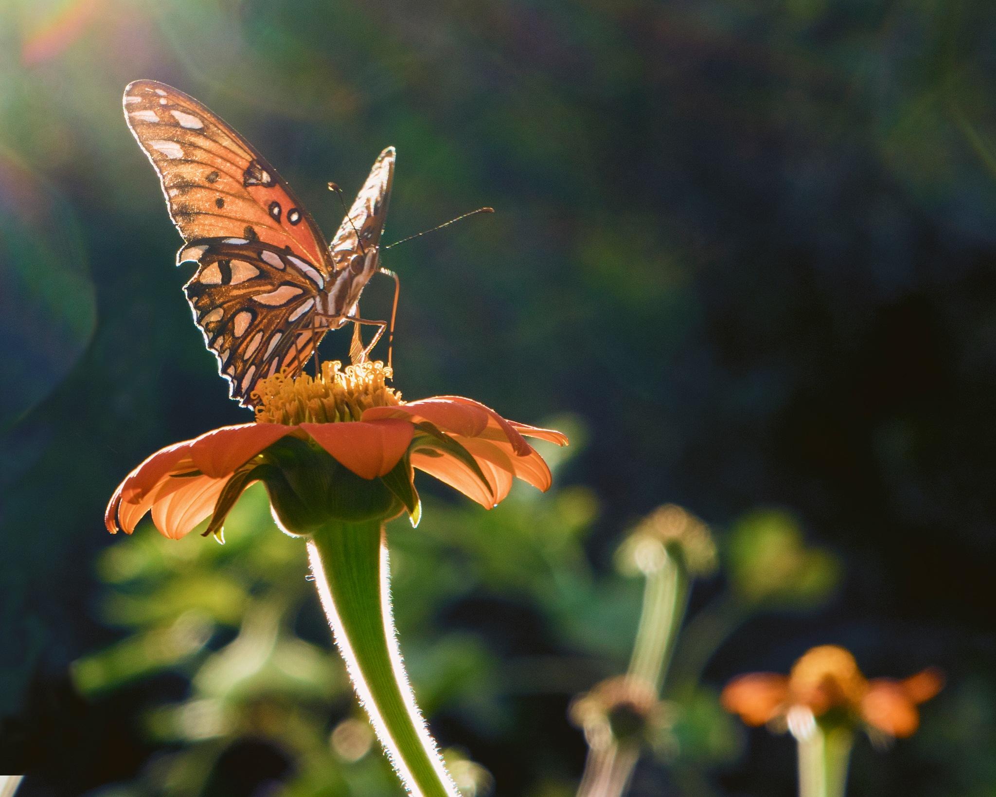 Butterfly @ Mason Mill Park, Atlanta, Ga. by Charles C. Pinckney