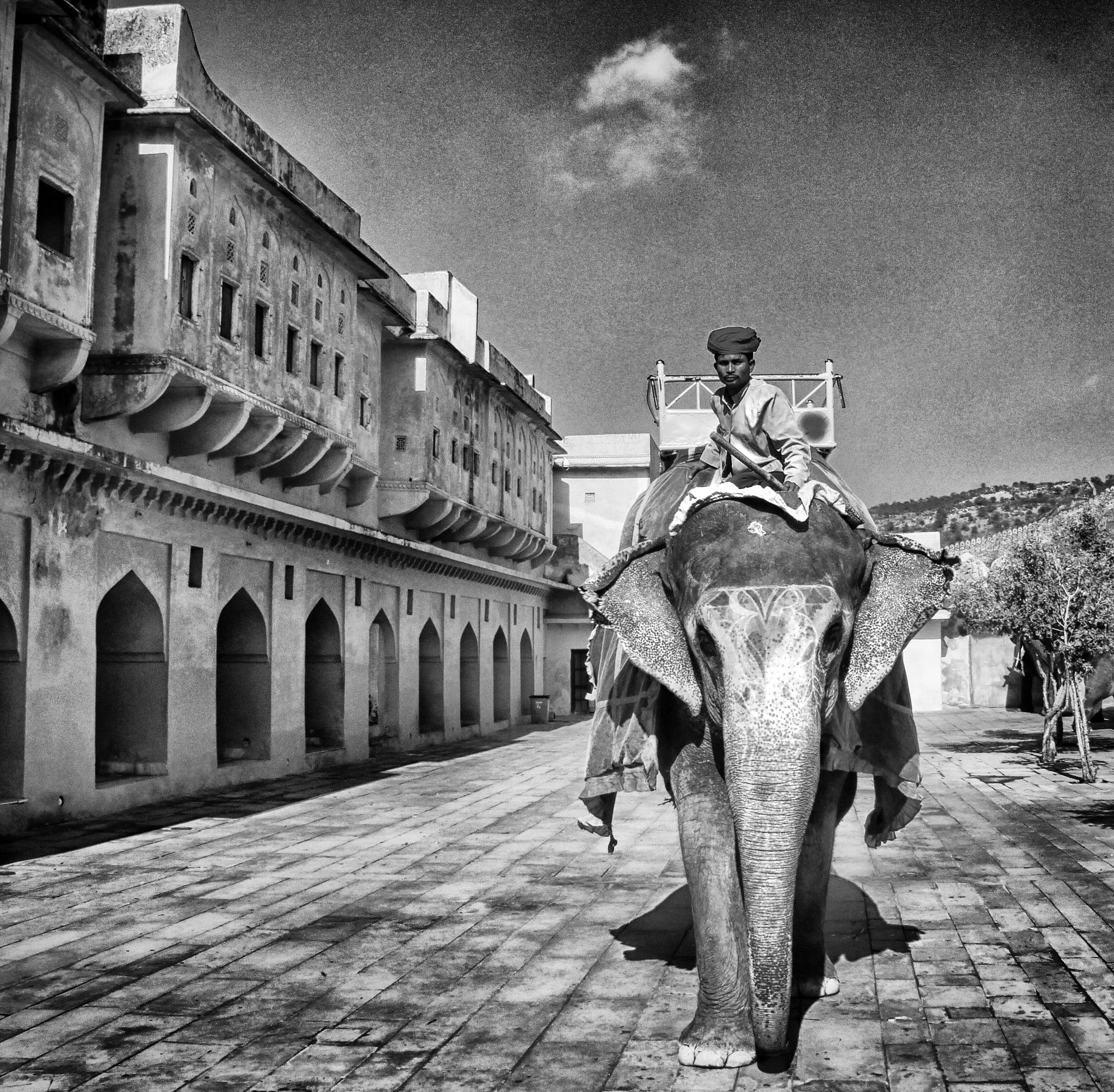 elephant by erdinc senyurek