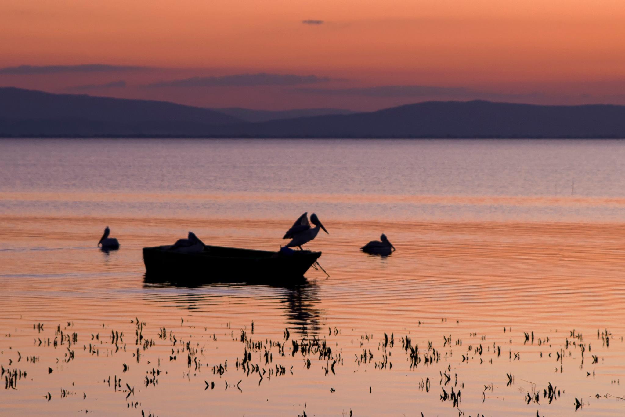 pelican by erdinc senyurek