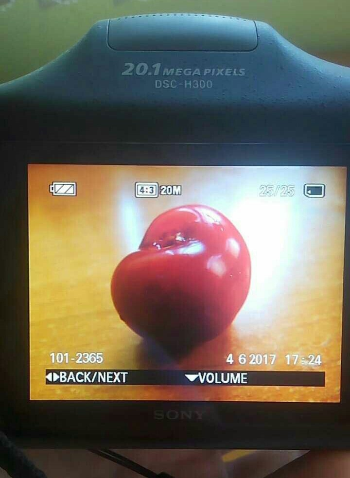 Cherry shoot by Desislava Bosilkova
