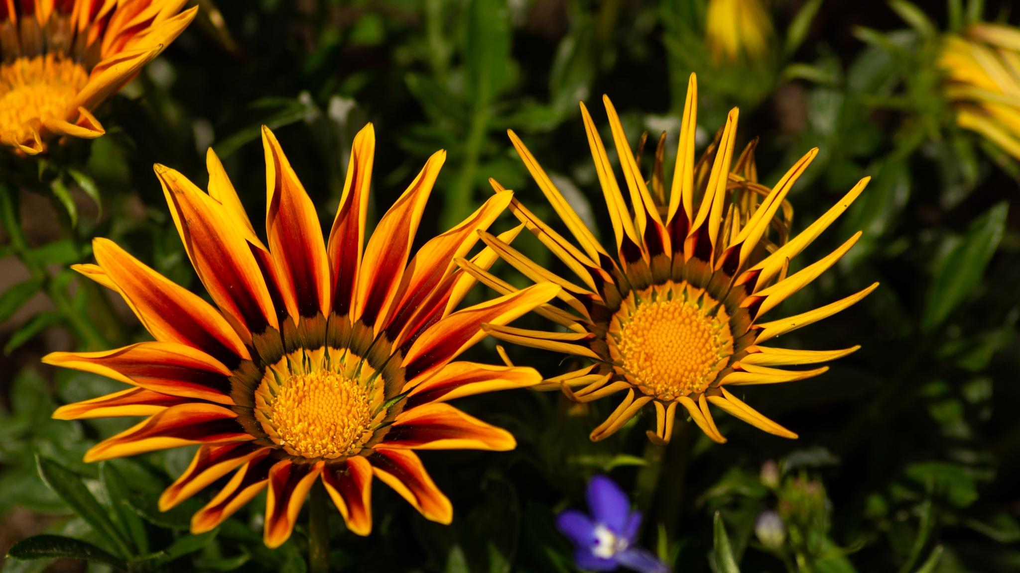 Flowers opening  by Marcelo Hernan Zimmt
