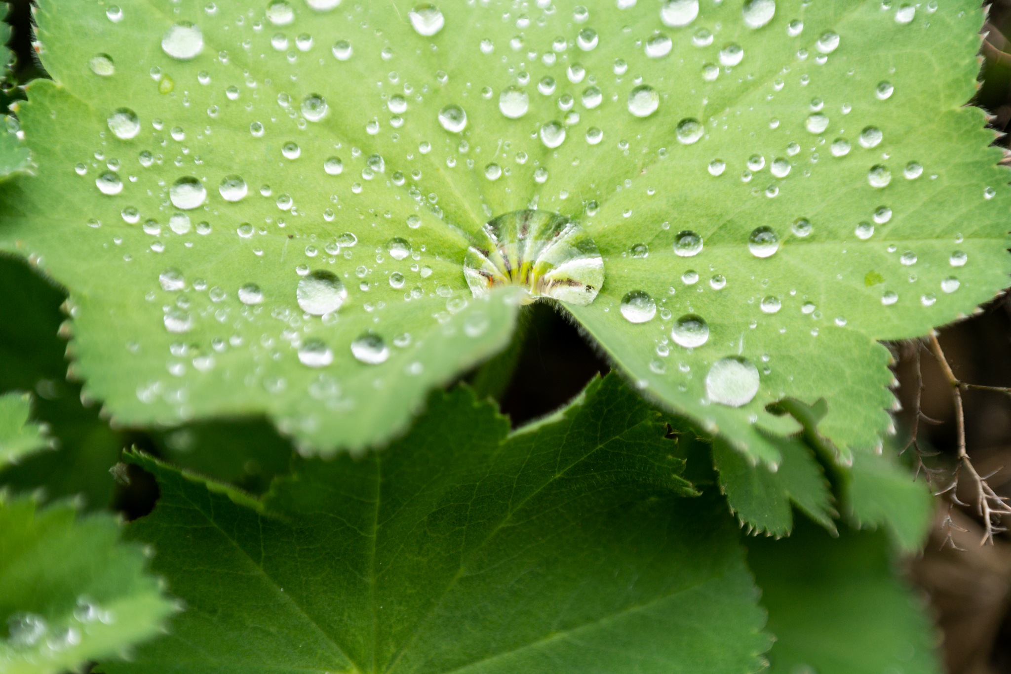 leaf and raindrops by Marcelo Hernan Zimmt